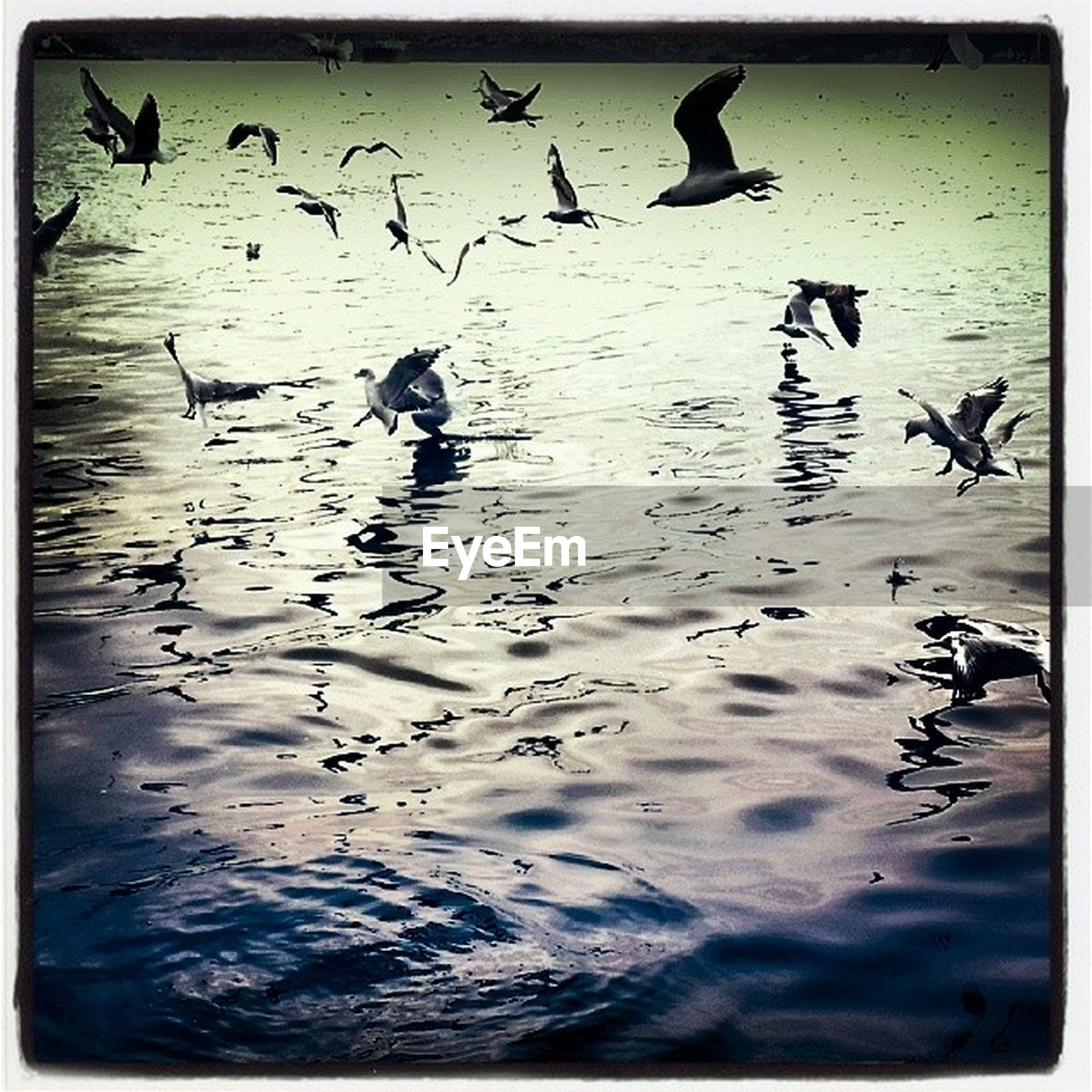bird, animal themes, animals in the wild, wildlife, flying, water, flock of birds, transfer print, spread wings, waterfront, auto post production filter, medium group of animals, duck, lake, nature, seagull, zoology, togetherness, reflection