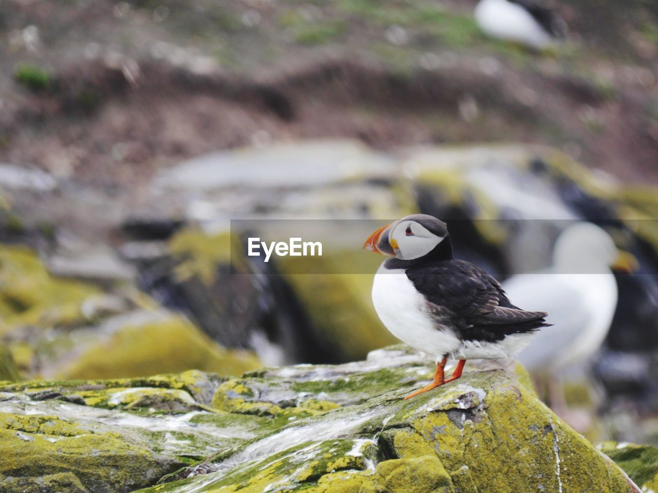 animal themes, animal, bird, vertebrate, animals in the wild, animal wildlife, one animal, perching, no people, day, rock, solid, rock - object, focus on foreground, nature, outdoors, water, close-up, side view
