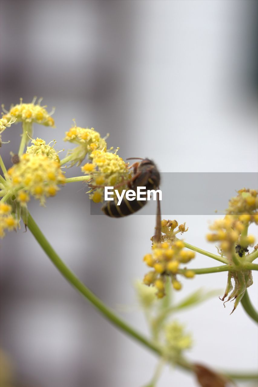 flowering plant, flower, plant, fragility, vulnerability, growth, beauty in nature, yellow, close-up, freshness, selective focus, day, no people, nature, flower head, petal, focus on foreground, inflorescence, insect, outdoors, springtime, pollen, willow tree, pollination