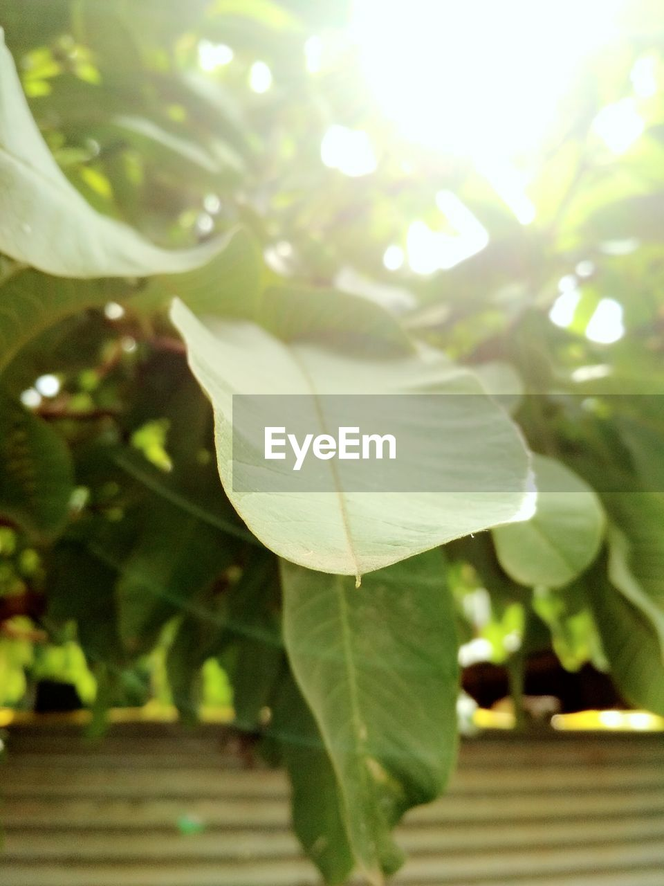 leaf, growth, nature, beauty in nature, day, no people, close-up, outdoors, fragility, tree, freshness