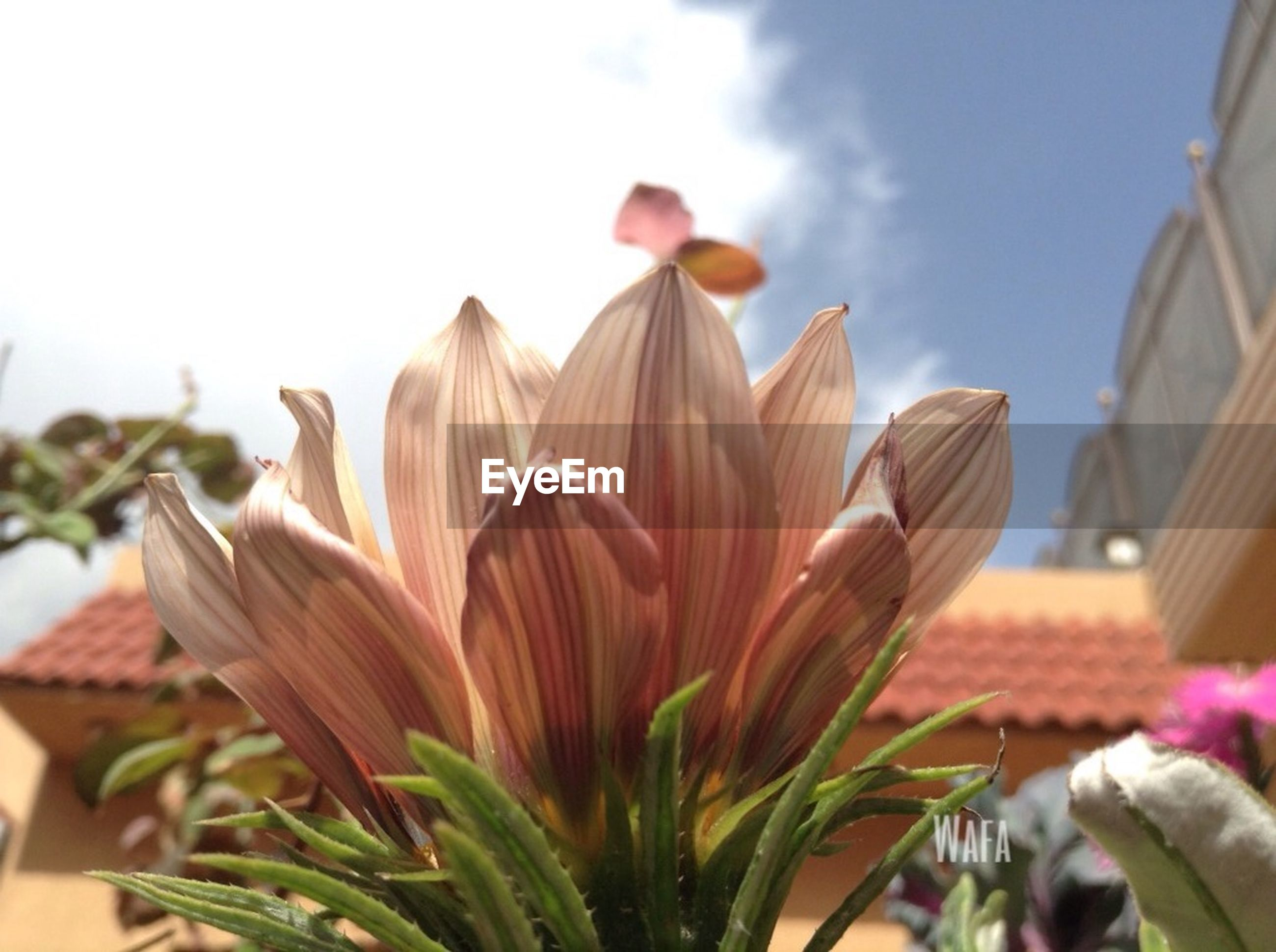 flower, low angle view, growth, close-up, freshness, leaf, fragility, focus on foreground, plant, petal, nature, sky, beauty in nature, sunlight, flower head, day, no people, outdoors, selective focus, stem