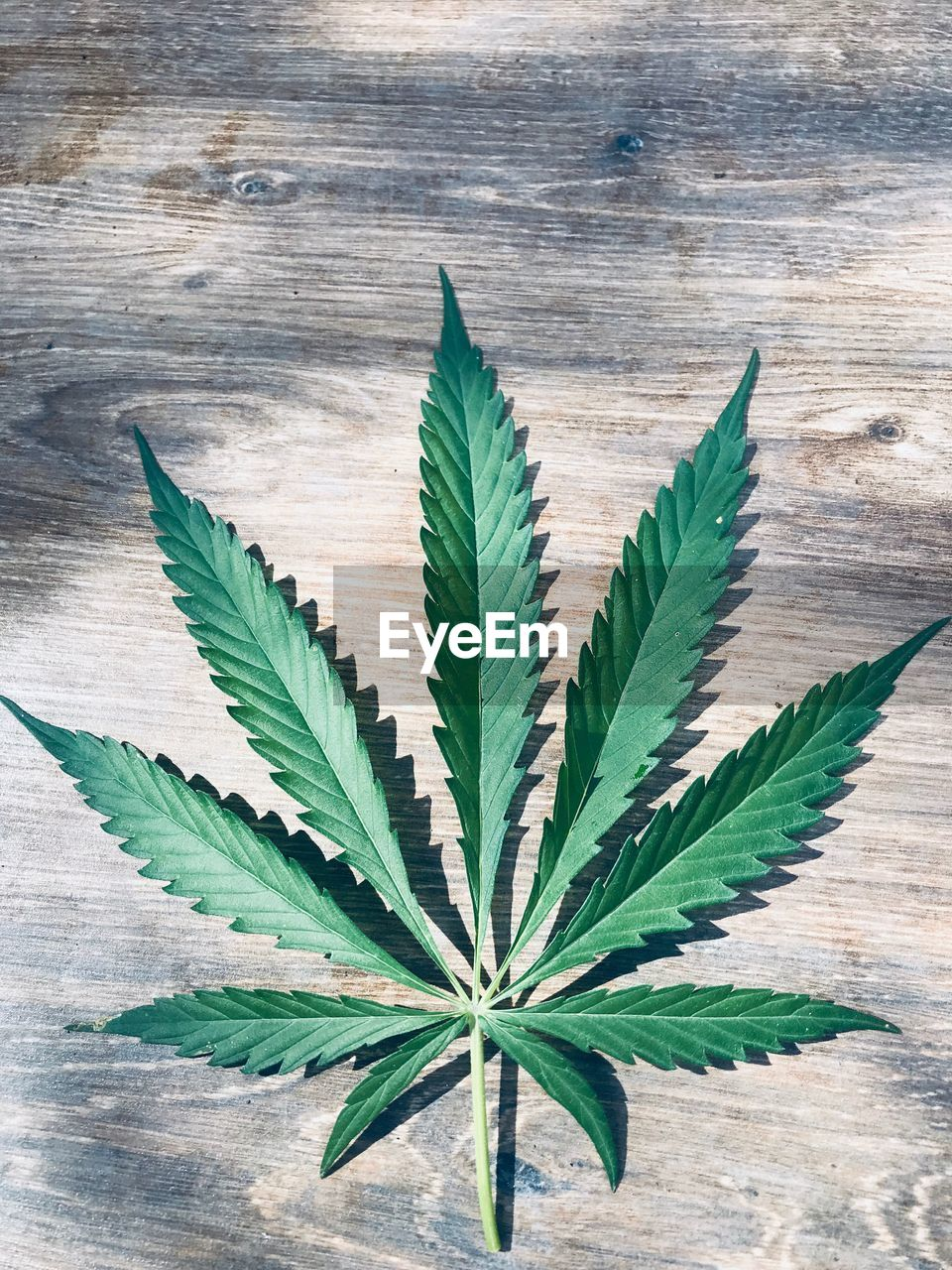 leaf, plant part, green color, close-up, marijuana - herbal cannabis, healthcare and medicine, indoors, medicine, no people, wood - material, nature, cannabis plant, plant, high angle view, narcotic, recreational drug, herbal medicine, directly above, growth, herb