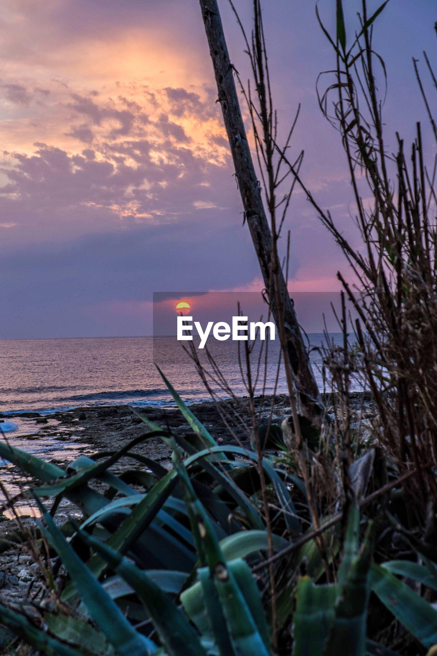 CACTUS ON BEACH AGAINST ROMANTIC SKY
