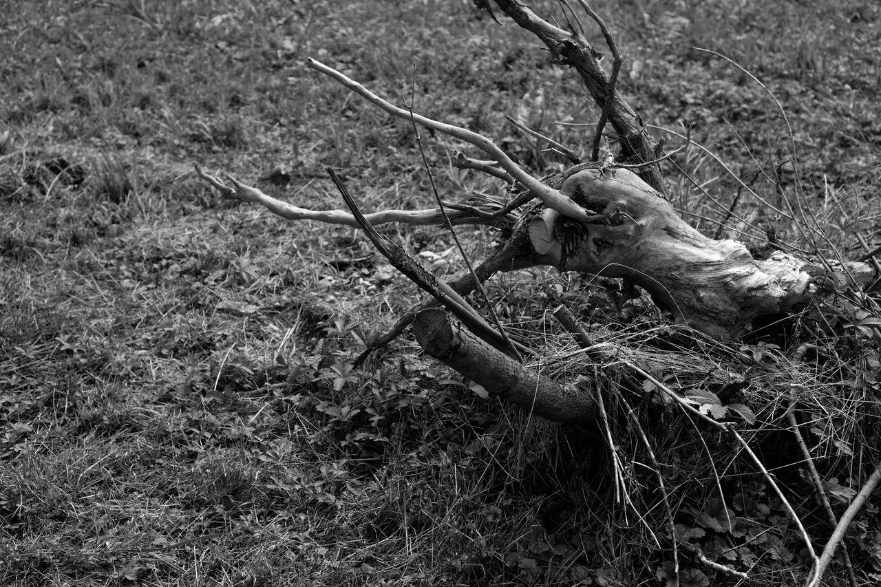 plant, land, field, nature, no people, grass, day, tree, deer, animal wildlife, bone, animal, animal skull, outdoors, animal themes, horned, mammal