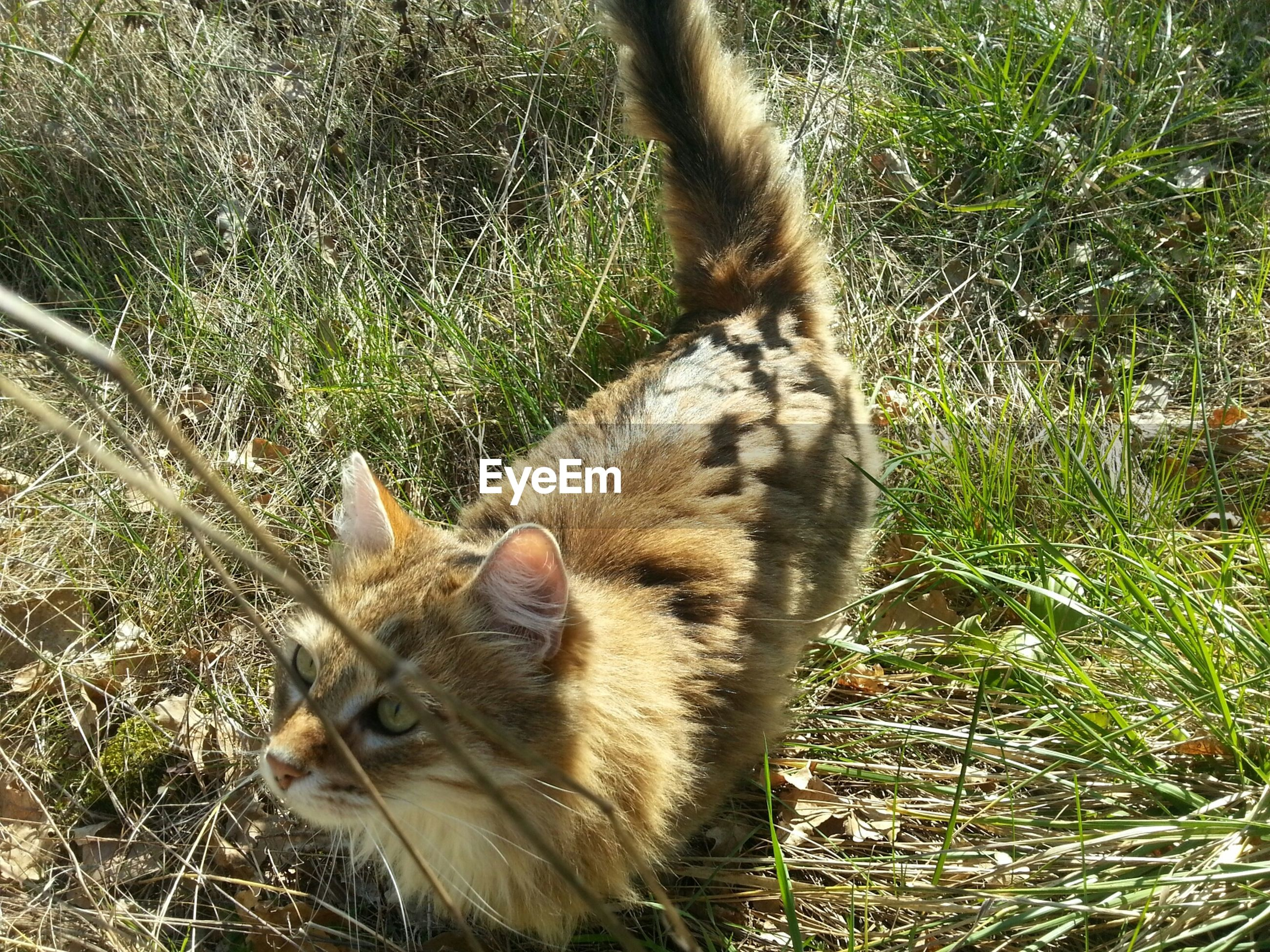 animal themes, one animal, mammal, domestic animals, domestic cat, cat, pets, feline, grass, whisker, relaxation, sitting, high angle view, plant, animals in the wild, field, wildlife, nature, no people, day