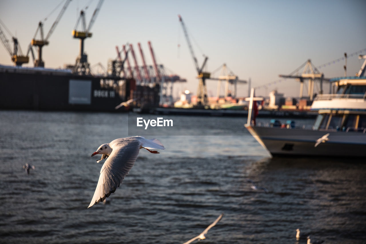nautical vessel, water, bird, animals in the wild, transportation, animal wildlife, vertebrate, animal themes, animal, flying, mode of transportation, sea, sky, one animal, seagull, nature, architecture, focus on foreground, no people, outdoors, sailboat