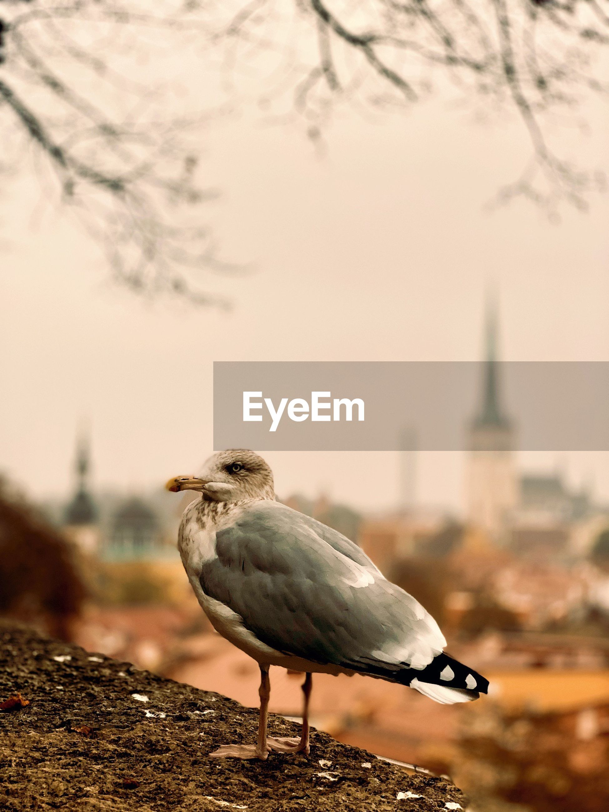 SEAGULL PERCHING ON A CITY