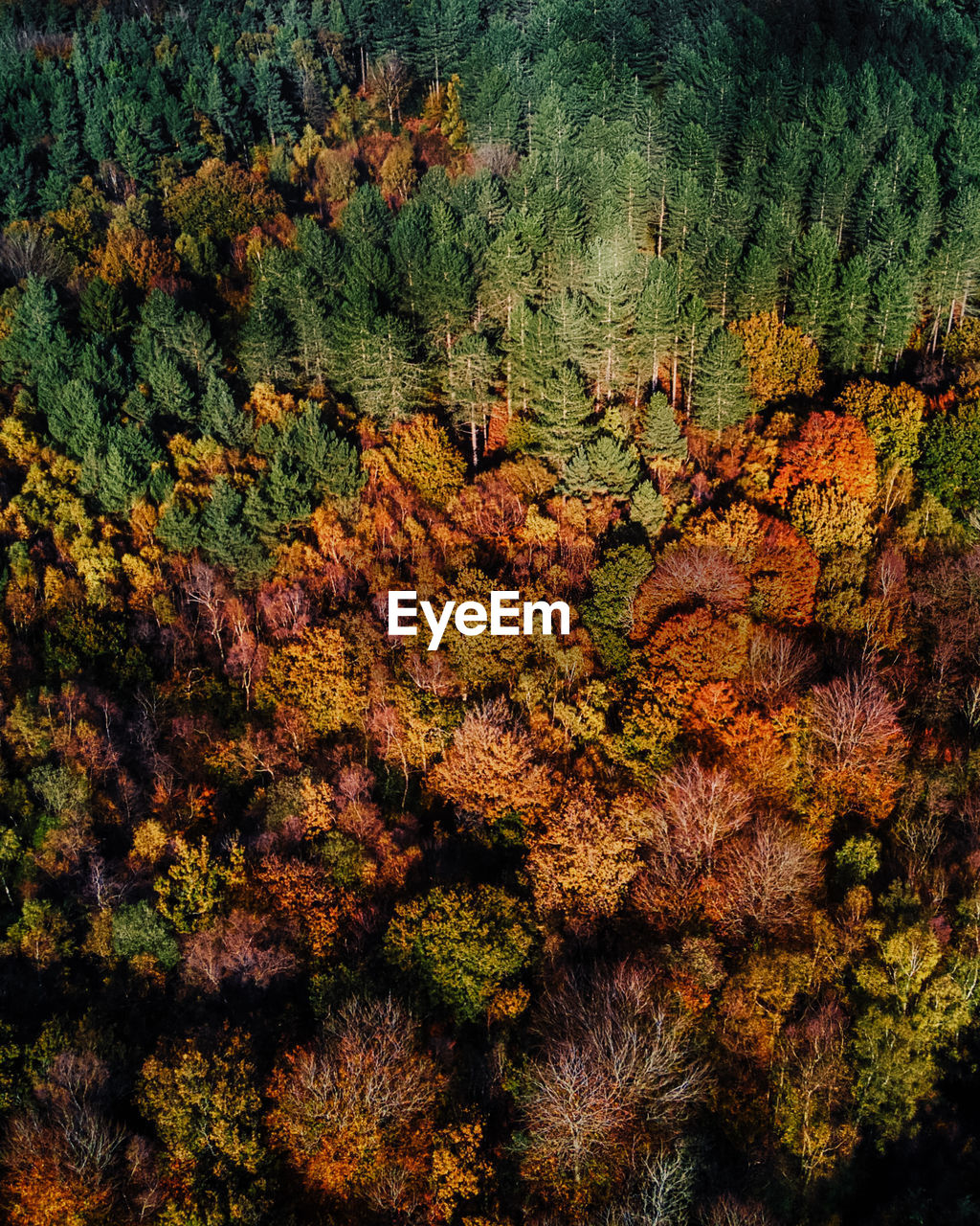 HIGH ANGLE VIEW OF TREE IN AUTUMN