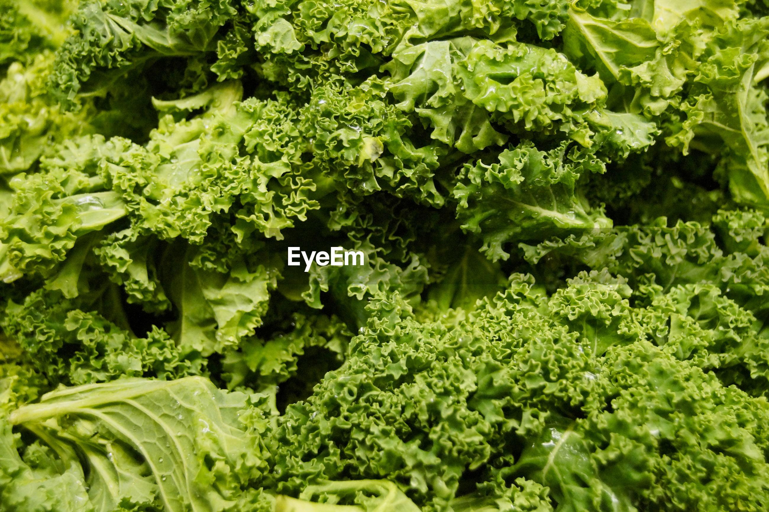 Full frame shot of fresh kale