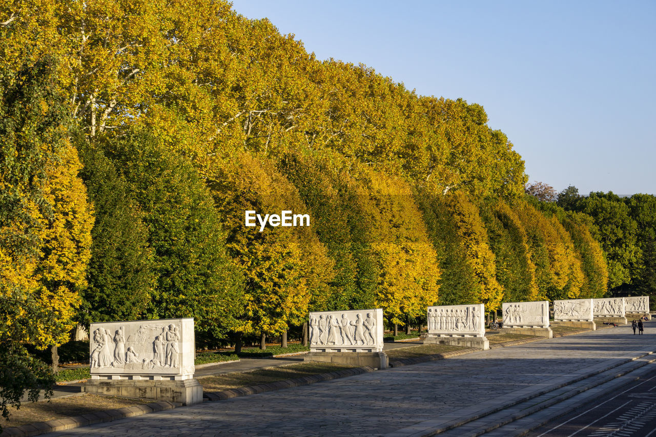 Yellow Flowering Plants Against Trees During Autumn