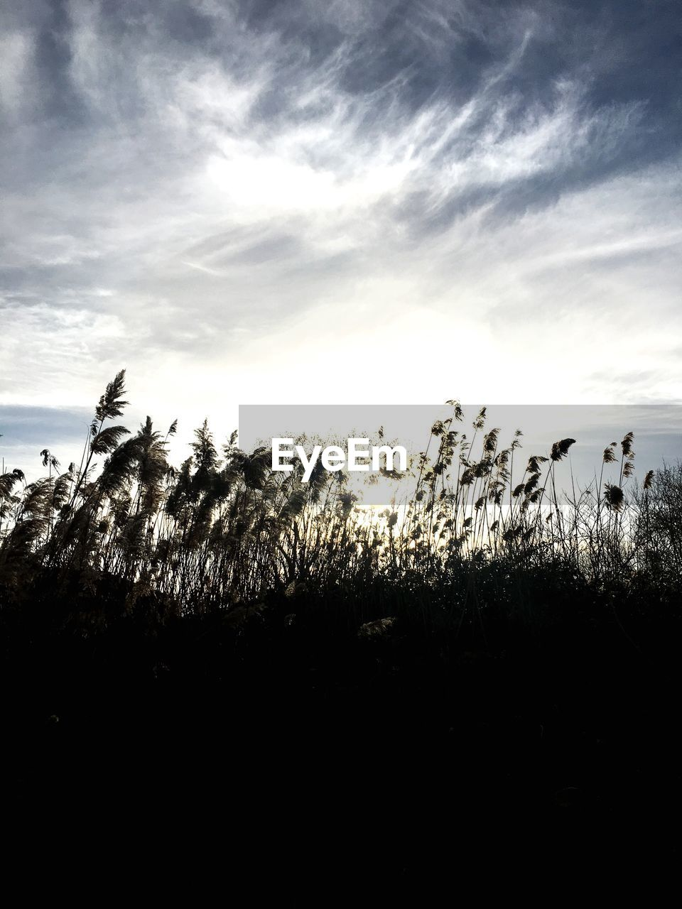 sky, cloud - sky, plant, tranquility, beauty in nature, tranquil scene, growth, tree, no people, nature, scenics - nature, silhouette, environment, outdoors, land, non-urban scene, day, landscape, field
