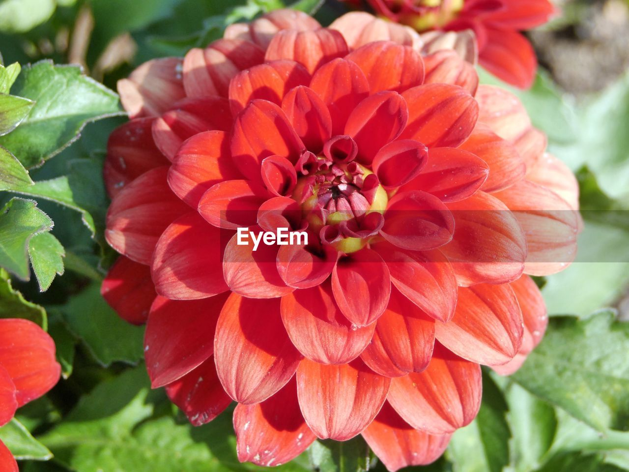 flower, petal, nature, beauty in nature, flower head, growth, fragility, animal themes, freshness, one animal, insect, plant, animals in the wild, day, blooming, outdoors, no people, bee, focus on foreground, close-up, animal wildlife, leaf, pollination, zinnia