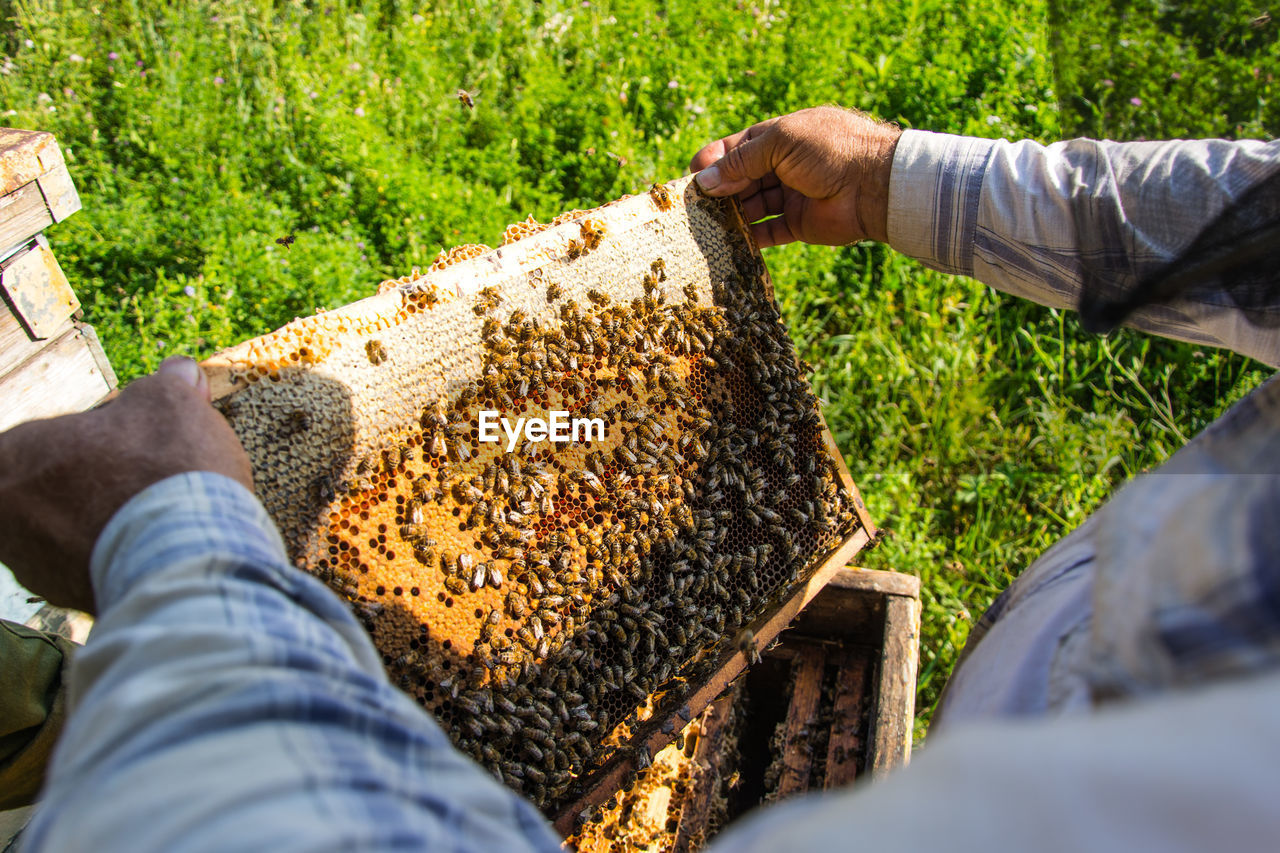 human body part, apiculture, holding, invertebrate, animals in the wild, food, insect, beehive, group of animals, beauty in nature, bee, honey, one person, animal wildlife, nature, day, animal themes, animal, human hand, honeycomb, hand, outdoors, human limb