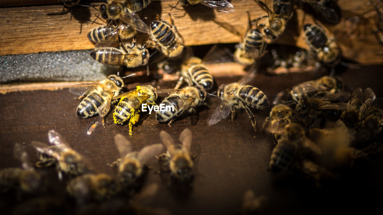 High angle view of honey bee on wood