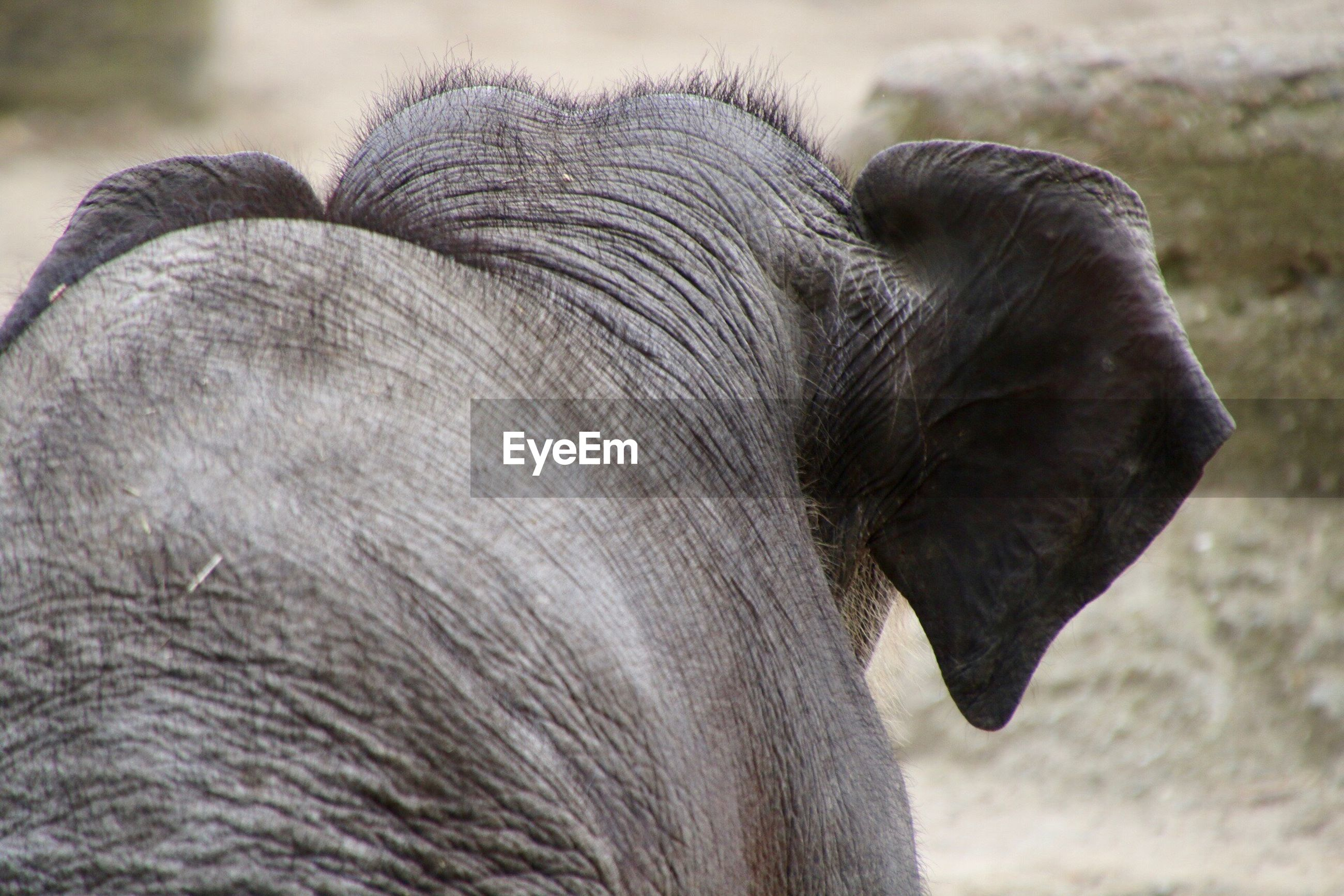 CLOSE-UP OF ELEPHANT IN A FIELD