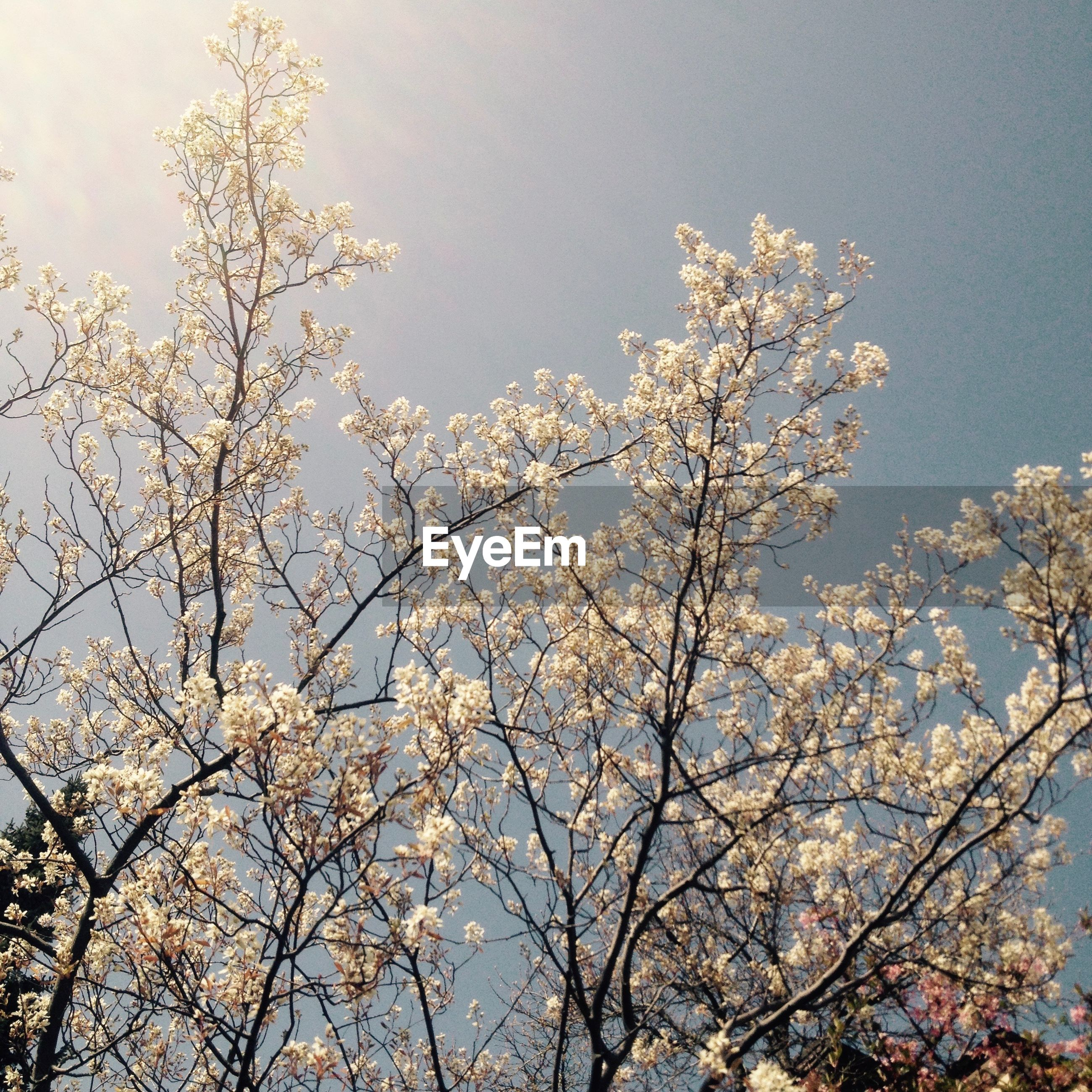 Low angle view of flowers growing on tree against sky