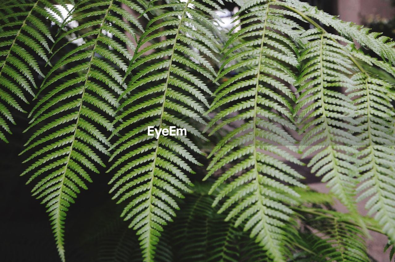 growth, nature, leaf, day, close-up, focus on foreground, green color, beauty in nature, freshness, plant, fern, no people, outdoors, frond, fragility