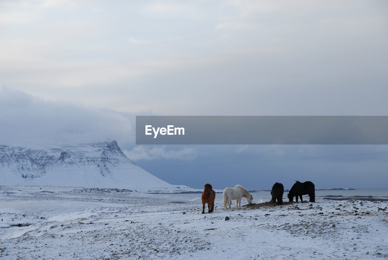 Horses on snow covered landscape against cloudy sky