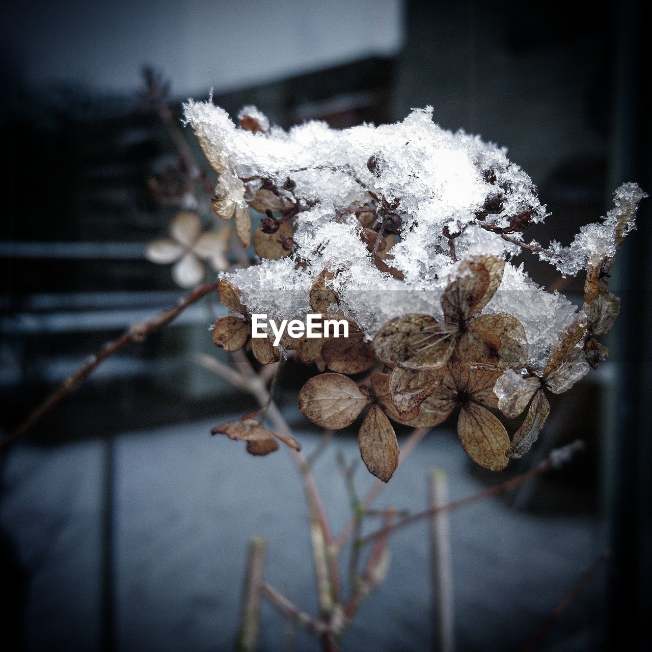 winter, cold temperature, snow, focus on foreground, nature, close-up, weather, white color, no people, frozen, beauty in nature, outdoors, day, dried plant, growth