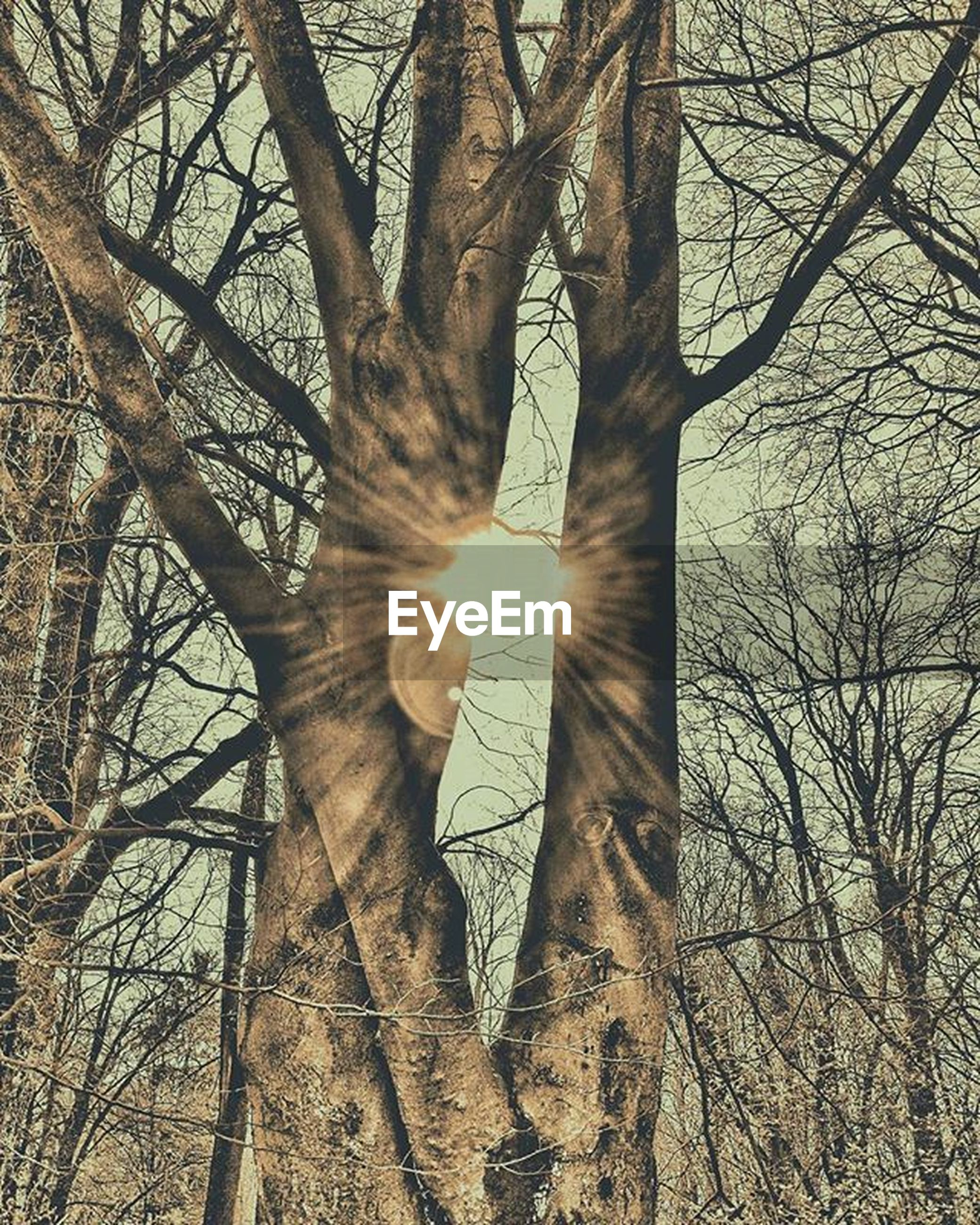 tree, bare tree, branch, tree trunk, low angle view, nature, day, outdoors, forest, one person, beauty in nature, sky, people