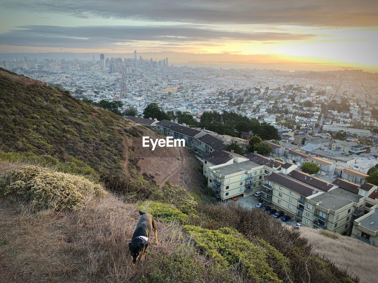 Dog on mountain against cityscape during sunset