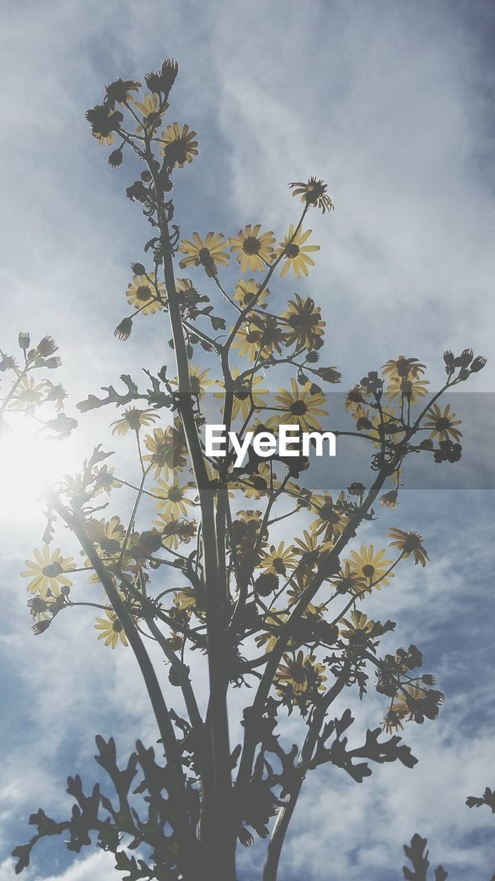 plant, growth, beauty in nature, sky, cloud - sky, flower, flowering plant, nature, no people, day, freshness, vulnerability, fragility, tree, outdoors, tranquility, close-up, low angle view, sunlight, plant part, spring