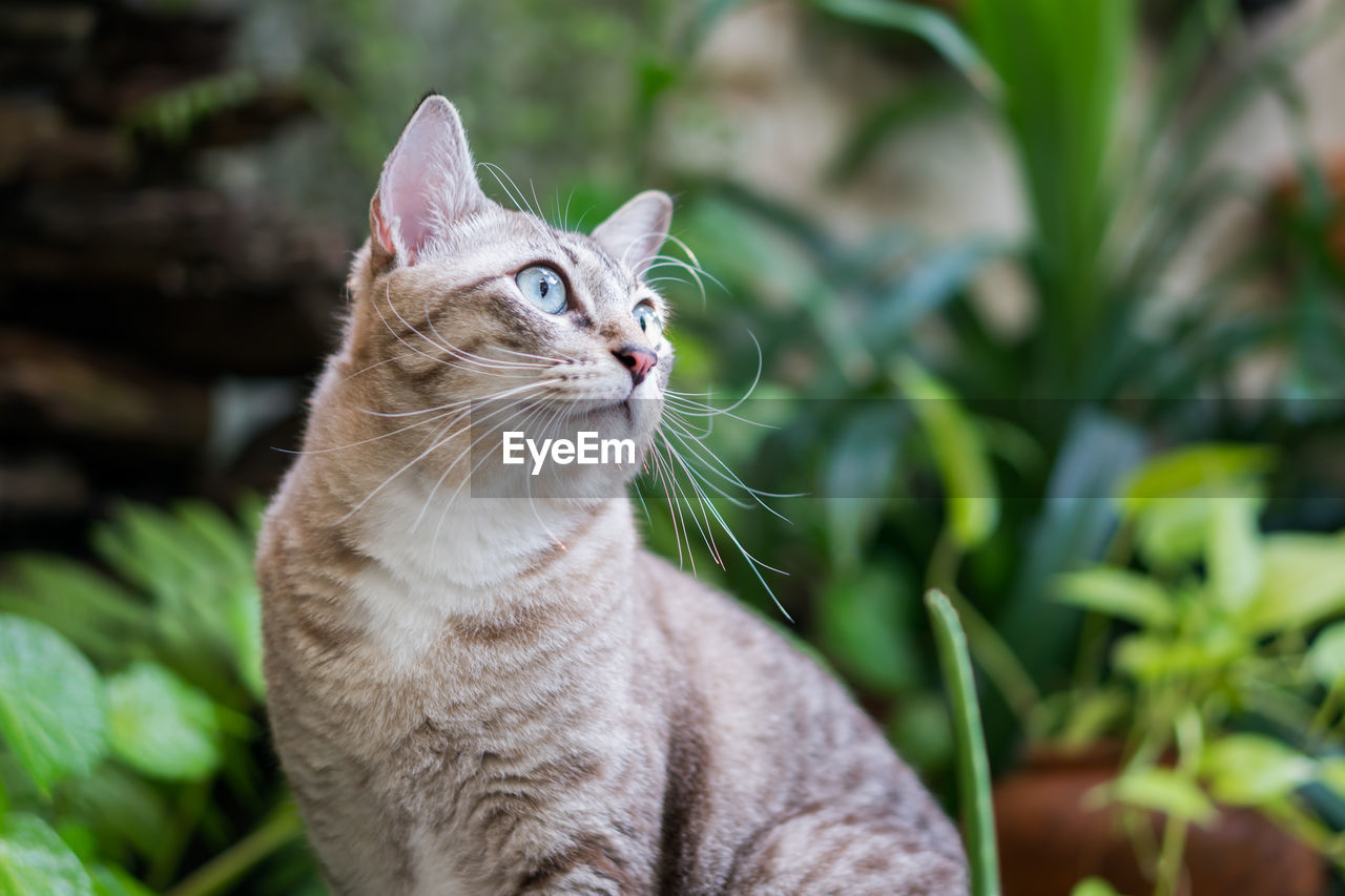 cat, feline, animal themes, domestic cat, one animal, domestic animals, animal, pets, domestic, mammal, vertebrate, focus on foreground, whisker, looking, looking away, no people, plant, close-up, day, nature, tabby