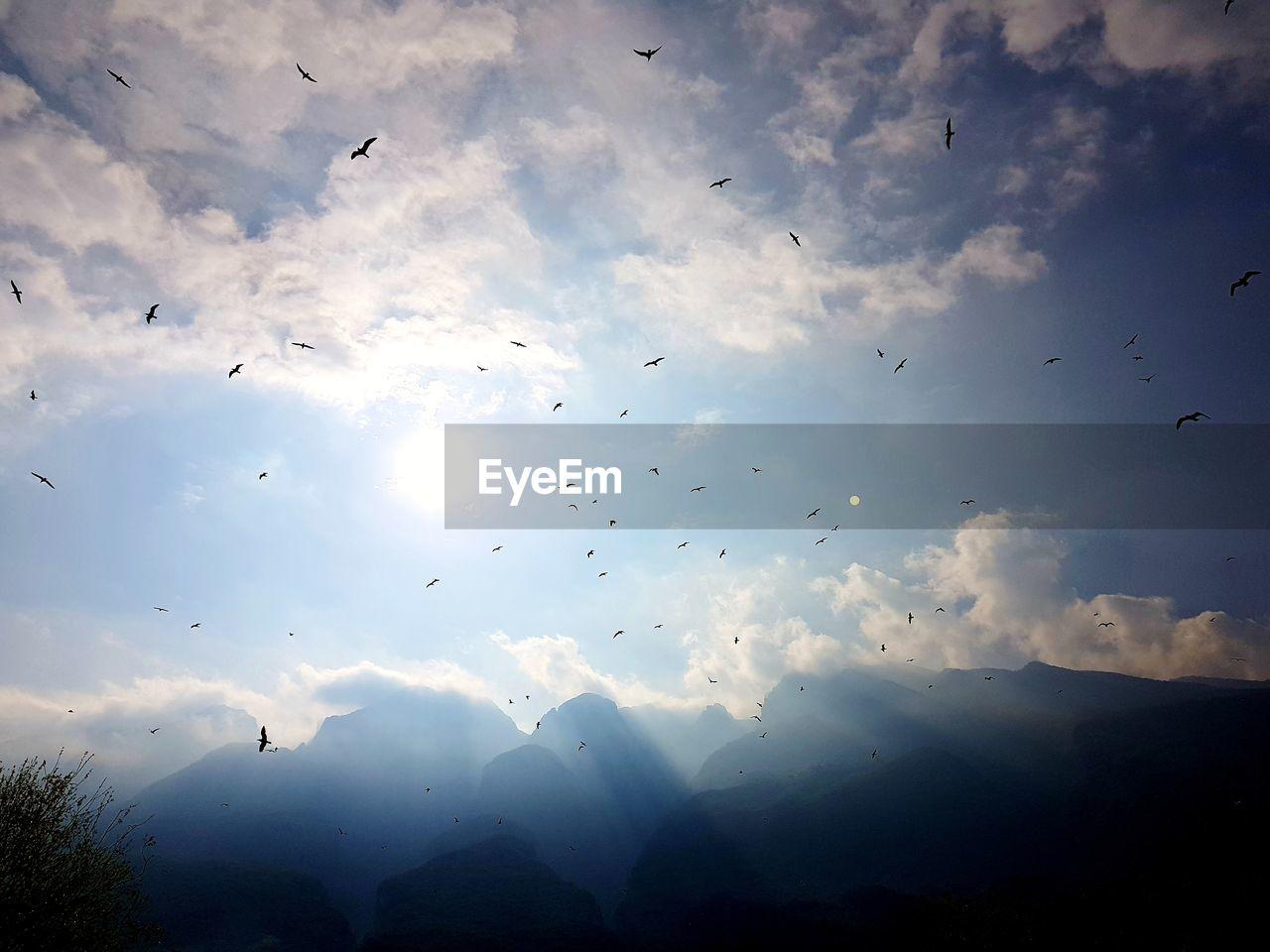 FLOCK OF BIRDS FLYING IN SKY