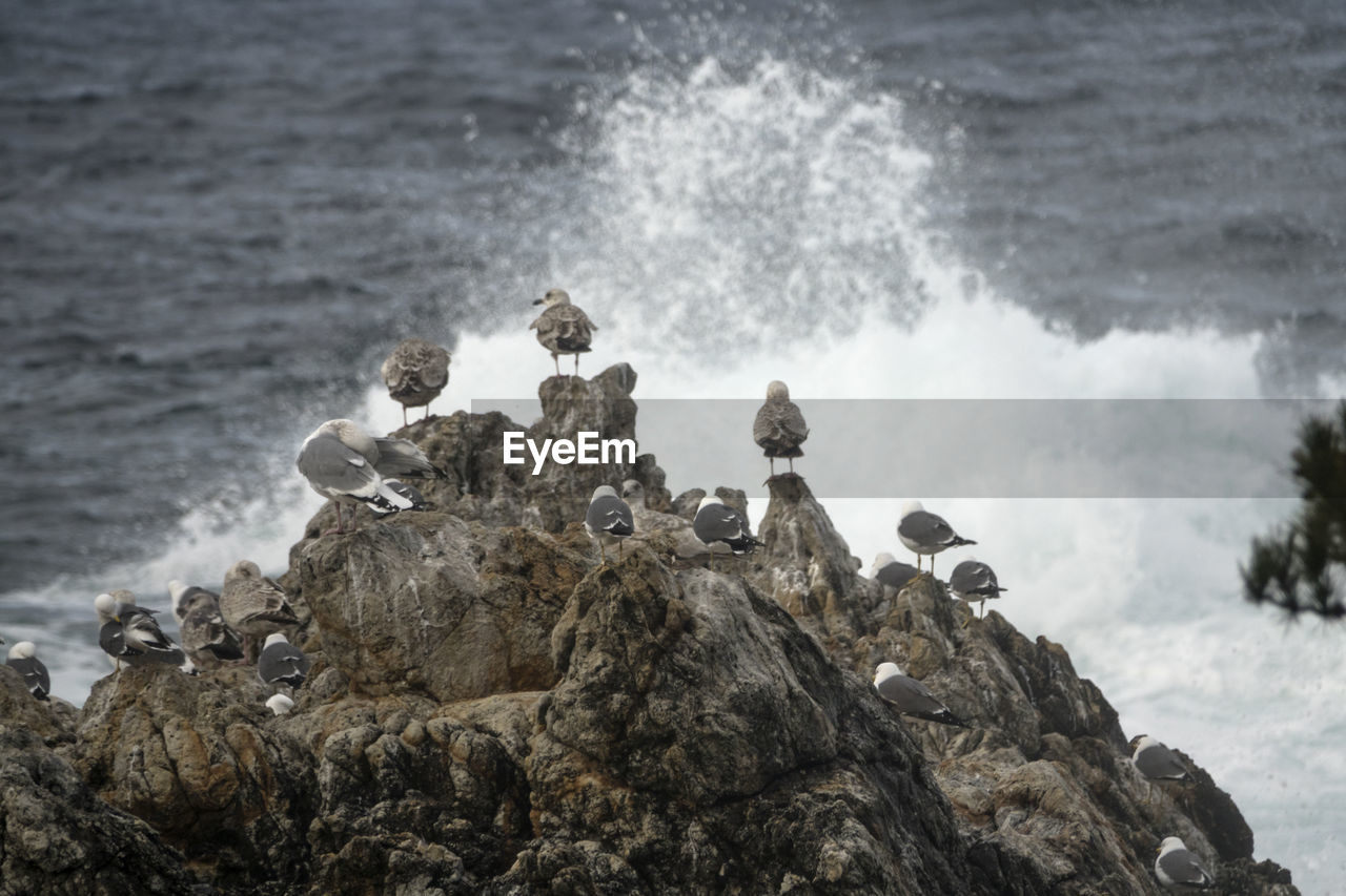 Seagulls Perching On Rock Formation At Beach