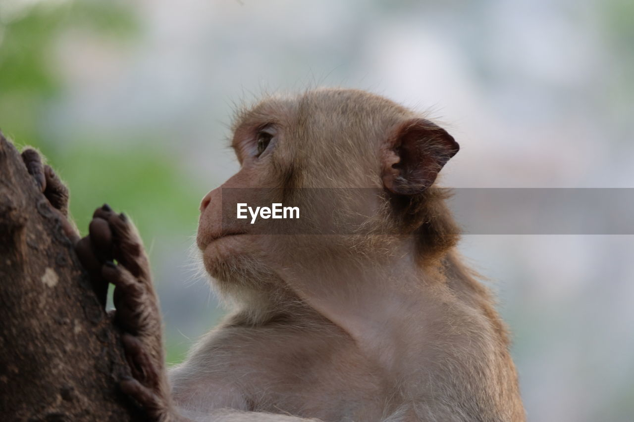 primate, mammal, animal wildlife, focus on foreground, animals in the wild, vertebrate, looking, group of animals, young, young animal, two animals, looking away, sitting, ape, outdoors, animal family, care