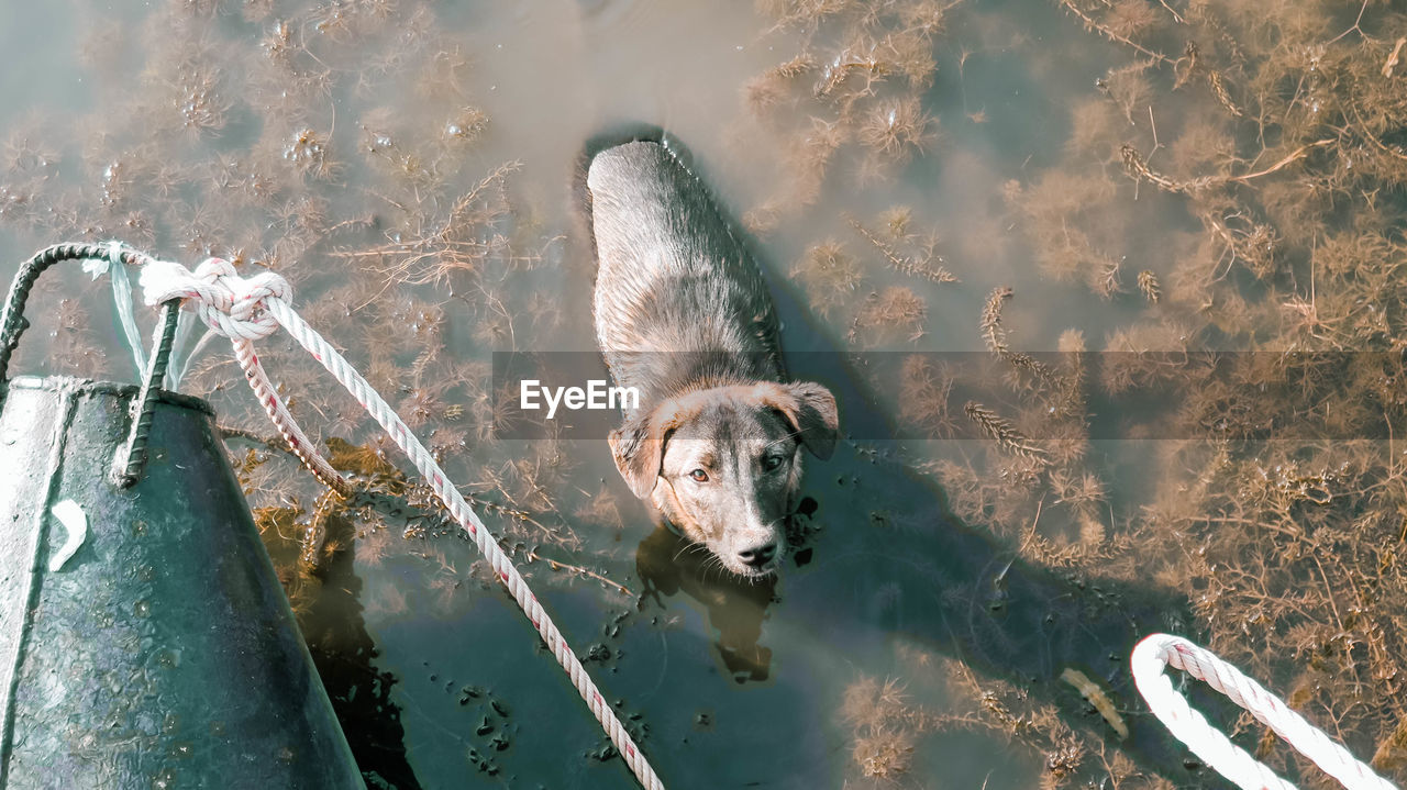 animal themes, animal, mammal, one animal, pets, domestic, vertebrate, domestic animals, water, day, lake, dog, no people, canine, nature, high angle view, animal wildlife, outdoors, sunlight
