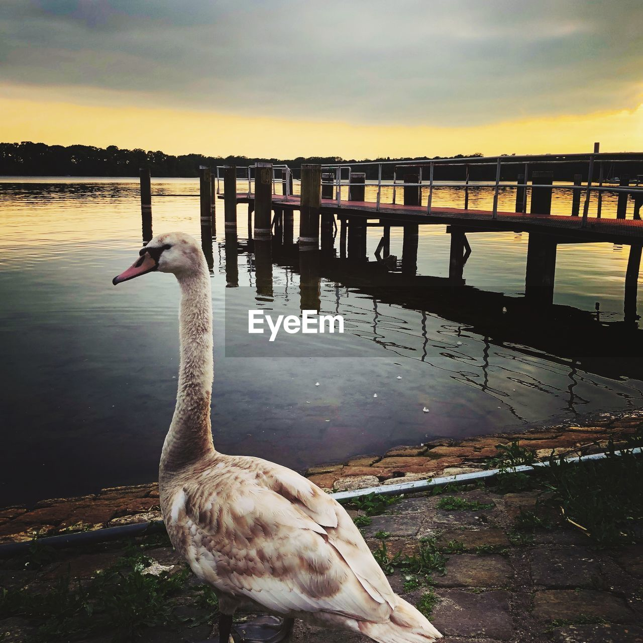 water, animal themes, animal, vertebrate, bird, animal wildlife, sunset, sky, animals in the wild, one animal, nature, lake, beauty in nature, cloud - sky, architecture, no people, built structure, reflection, water bird