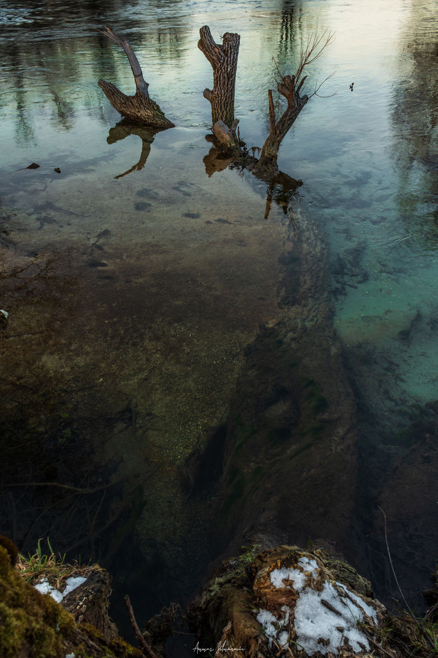 water, lake, nature, reflection, no people, day, high angle view, beauty in nature, animal wildlife, animal, land, plant, outdoors, animal themes, waterfront, vertebrate, animals in the wild, tranquility, group of animals, driftwood