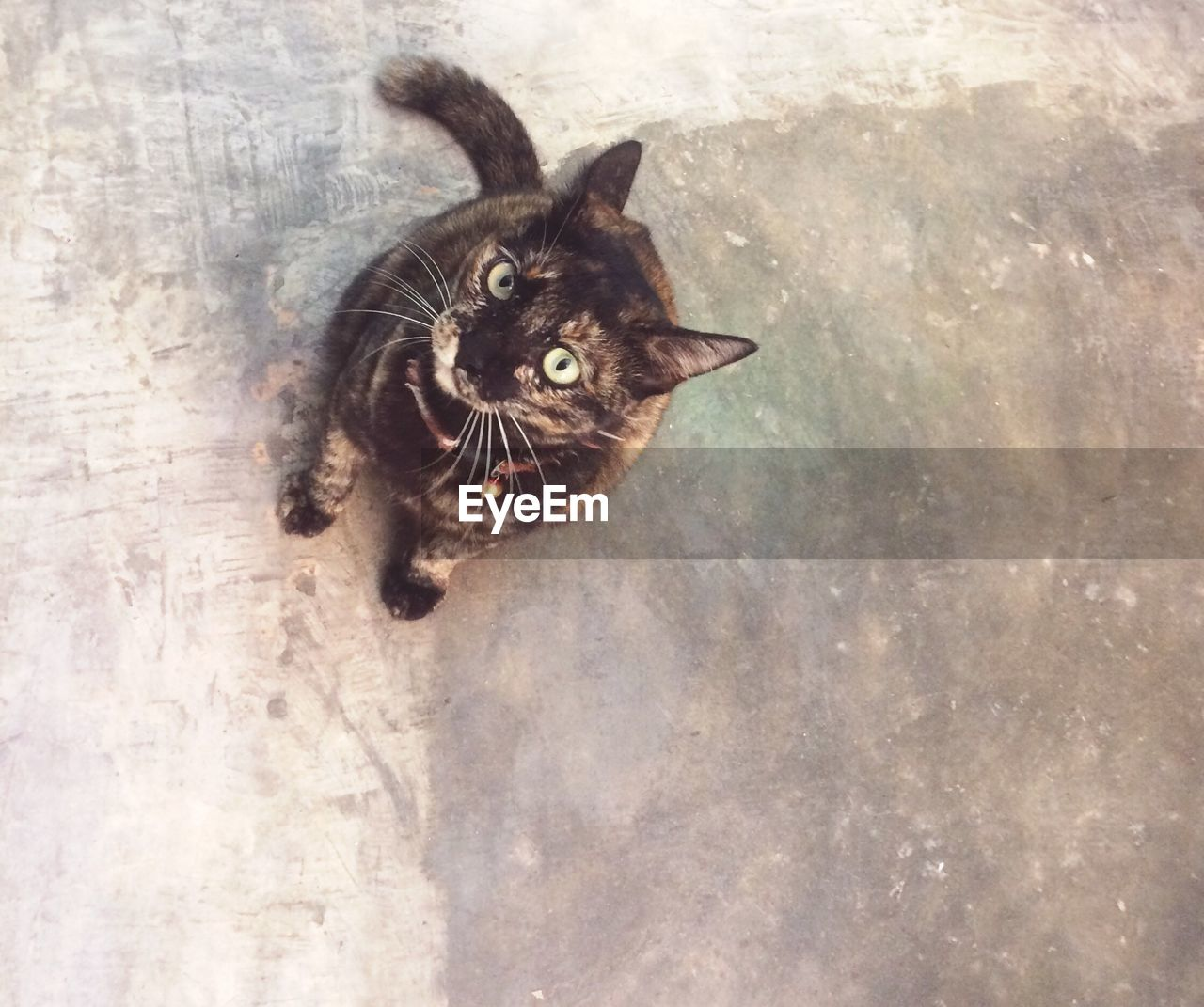 pets, domestic, domestic cat, cat, feline, mammal, domestic animals, one animal, vertebrate, no people, high angle view, whisker, portrait, looking, looking at camera, indoors, day, animal eye