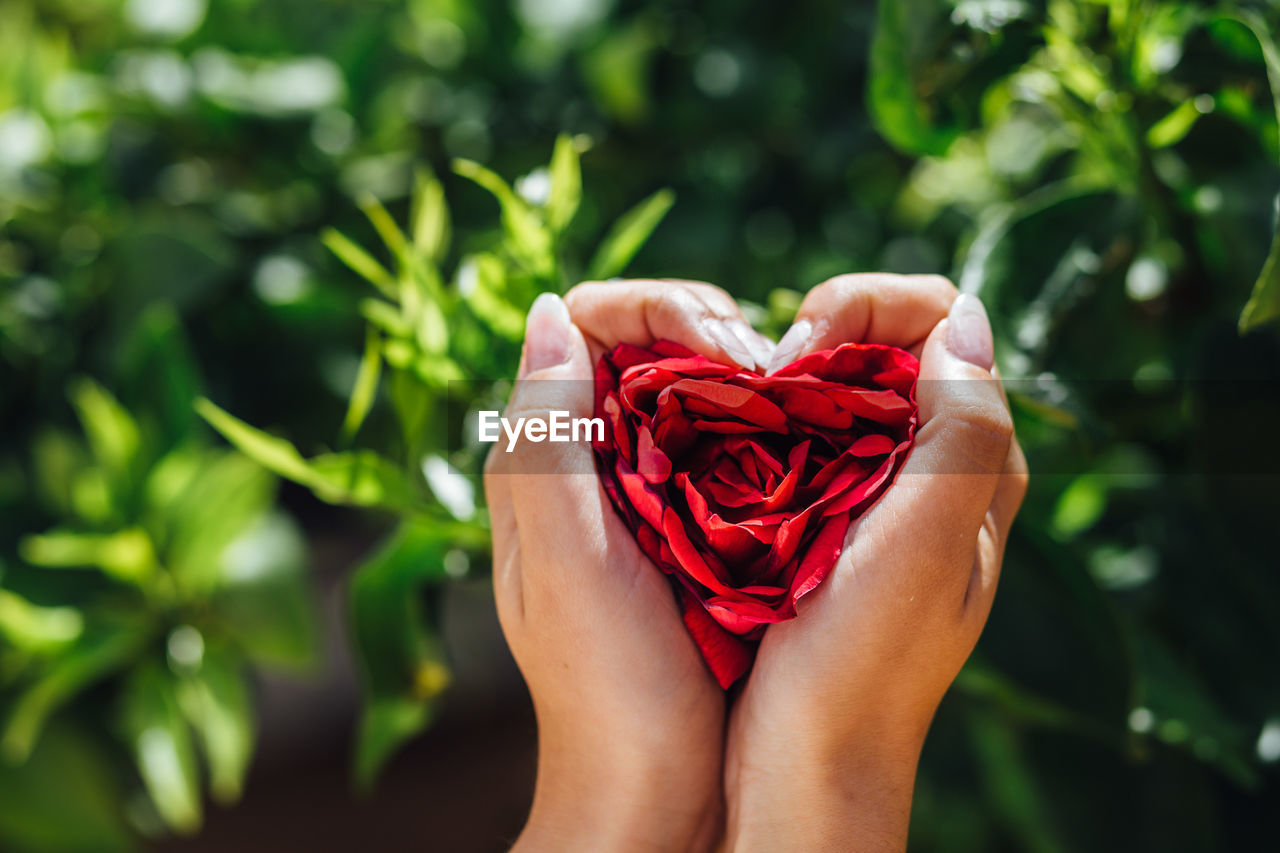 Cropped Hands Holding Red Roses In Heart Shape On Sunny Day