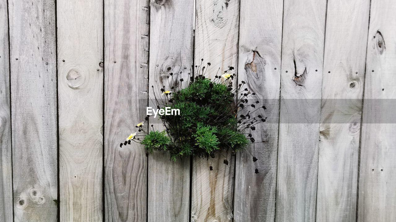 FULL FRAME SHOT OF PLANTS GROWING AGAINST WOODEN FENCE