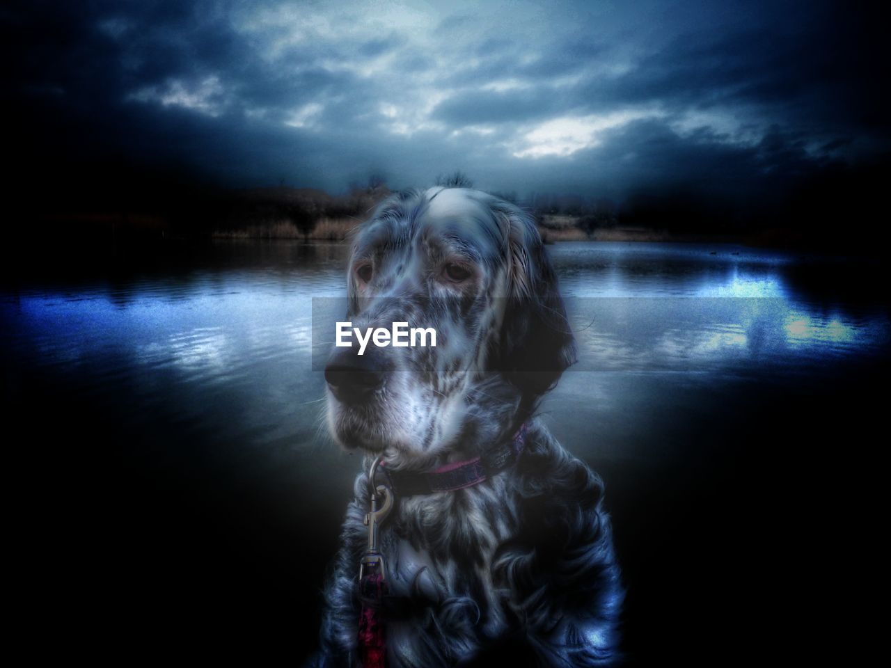 dog, domestic animals, pets, one animal, animal themes, water, mammal, nature, no people, sky, lake, outdoors, cloud - sky, day, beauty in nature, close-up
