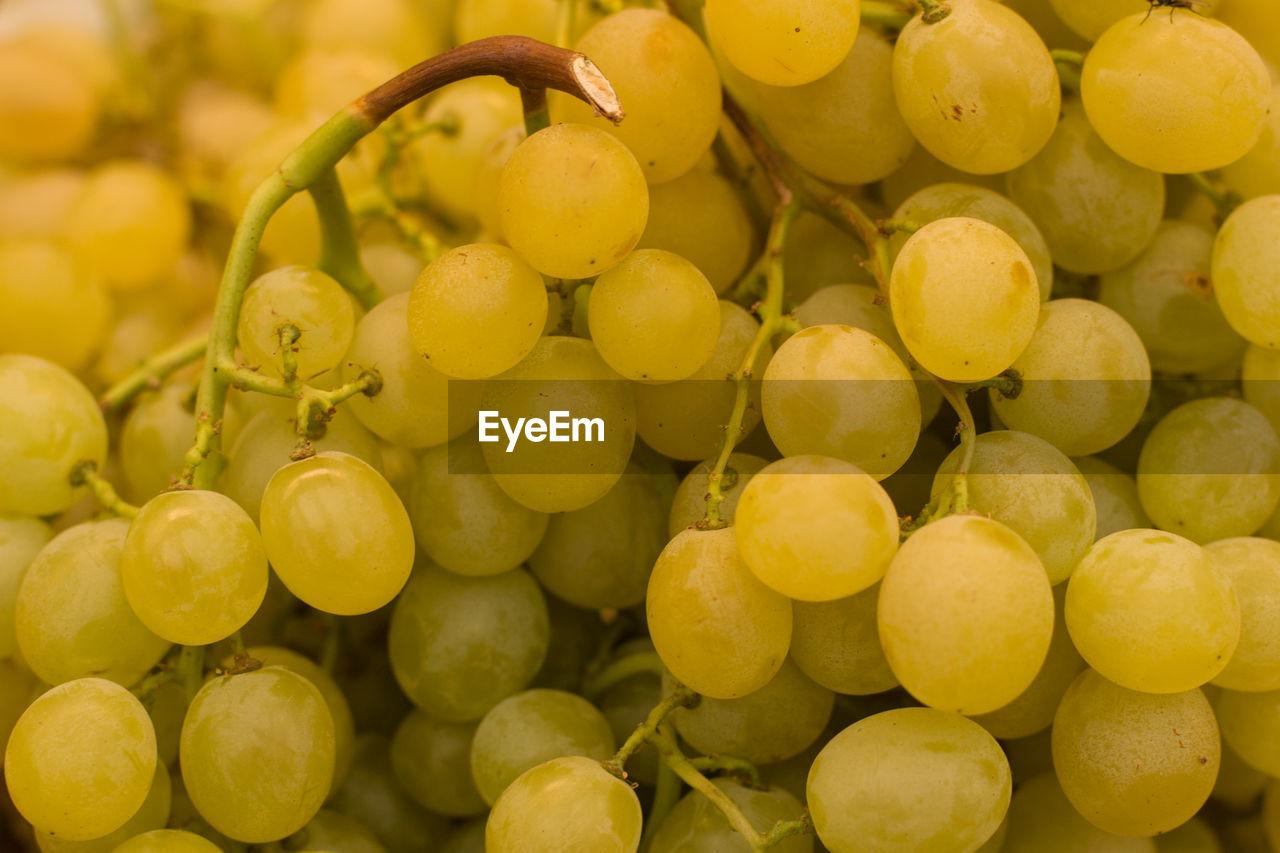 FULL FRAME SHOT OF YELLOW FRUITS