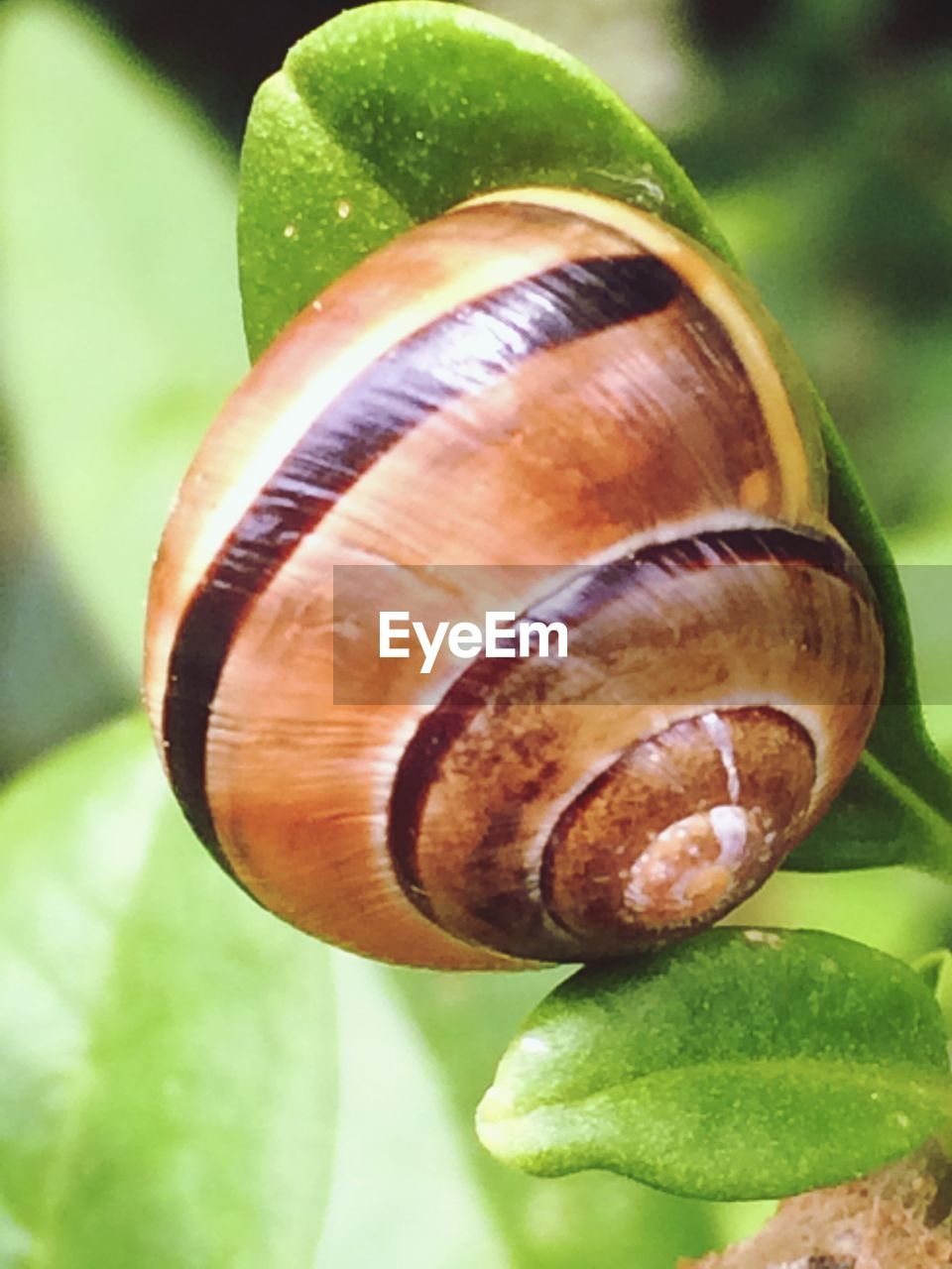 snail, gastropod, animal shell, close-up, one animal, leaf, wildlife, animal themes, nature, no people, fragility, spiral, focus on foreground, green color, animals in the wild, outdoors, day