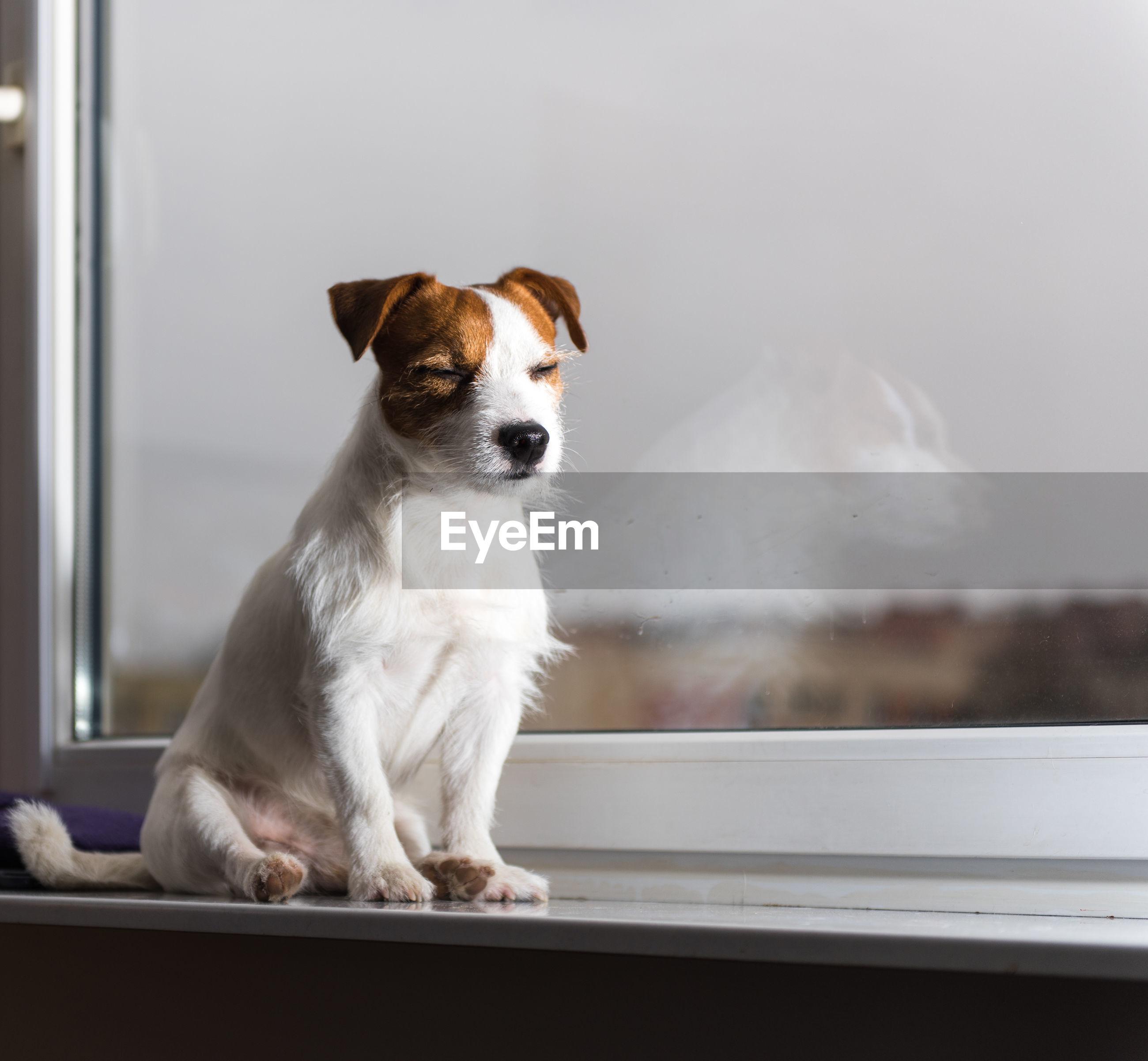 Dog sitting on window sill