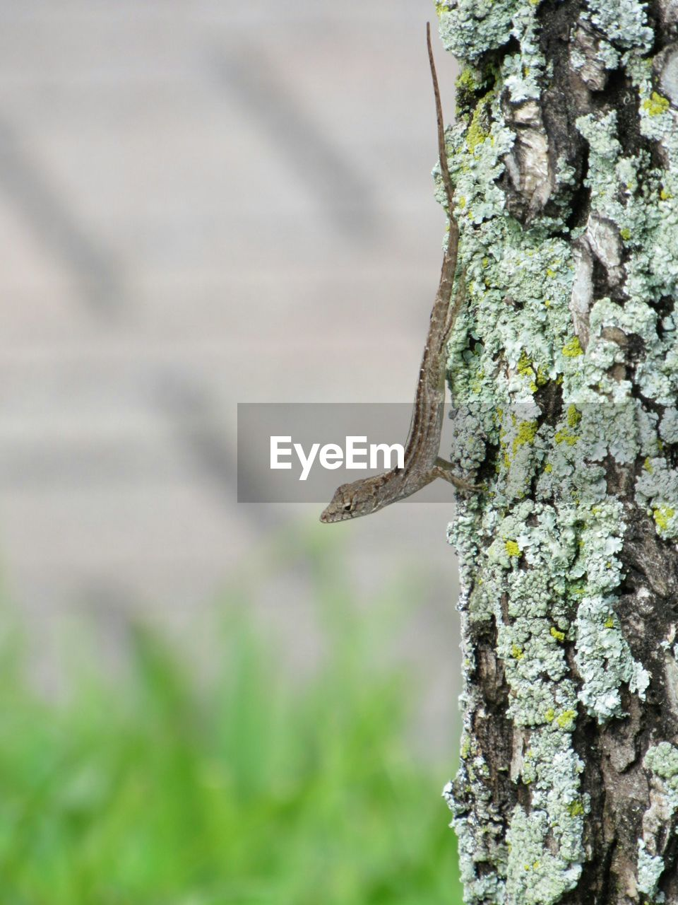 tree trunk, textured, focus on foreground, tree, no people, day, outdoors, close-up, nature, lichen, woodpecker