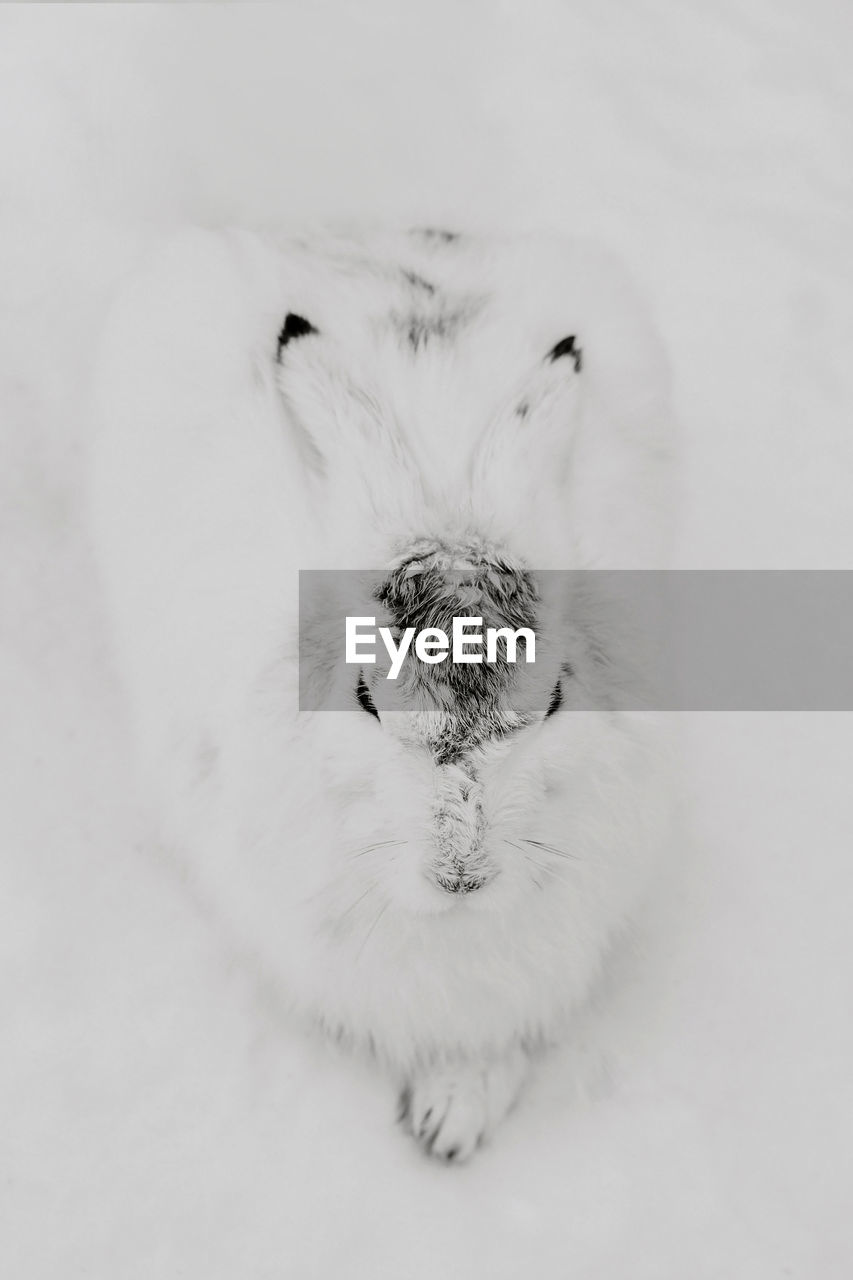 pets, domestic, one animal, animal themes, mammal, animal, domestic animals, indoors, vertebrate, close-up, studio shot, animal body part, no people, relaxation, canine, dog, white color, cute, cat, high angle view, animal head