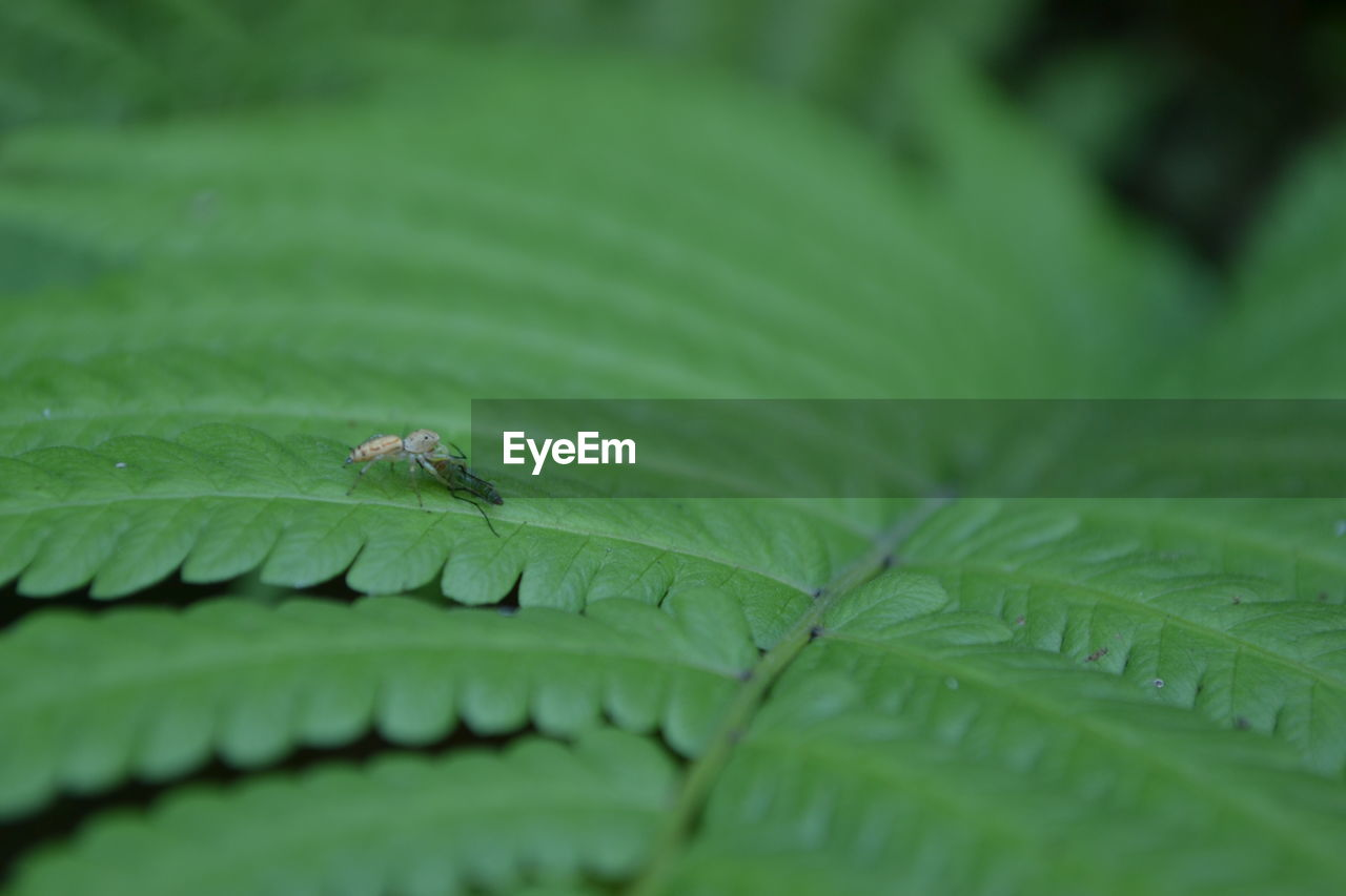 plant part, leaf, green color, selective focus, close-up, growth, nature, plant, animal themes, no people, insect, animal, one animal, animal wildlife, animals in the wild, invertebrate, day, beauty in nature, outdoors, full frame, leaves