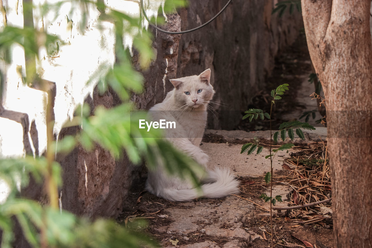 mammal, animal themes, animal, domestic, one animal, pets, domestic animals, cat, vertebrate, plant, feline, no people, selective focus, domestic cat, tree, day, nature, tree trunk, trunk, portrait, kitten, whisker