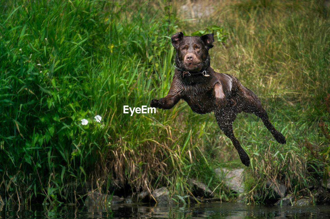 animal, animal themes, one animal, mammal, canine, dog, pets, domestic, plant, vertebrate, domestic animals, water, nature, no people, green color, grass, motion, animals in the wild, day