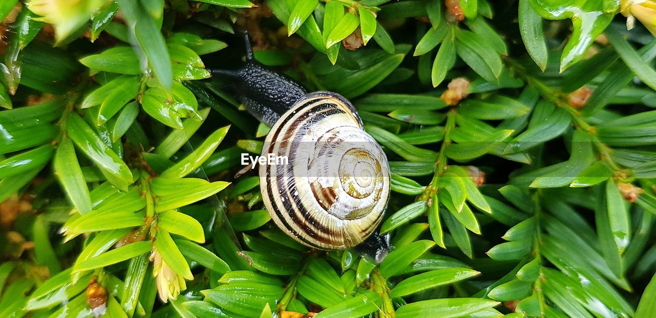 mollusk, gastropod, animal wildlife, invertebrate, animal, animal themes, snail, green color, shell, plant part, leaf, animal shell, one animal, animals in the wild, close-up, day, nature, growth, no people, plant, outdoors, crawling
