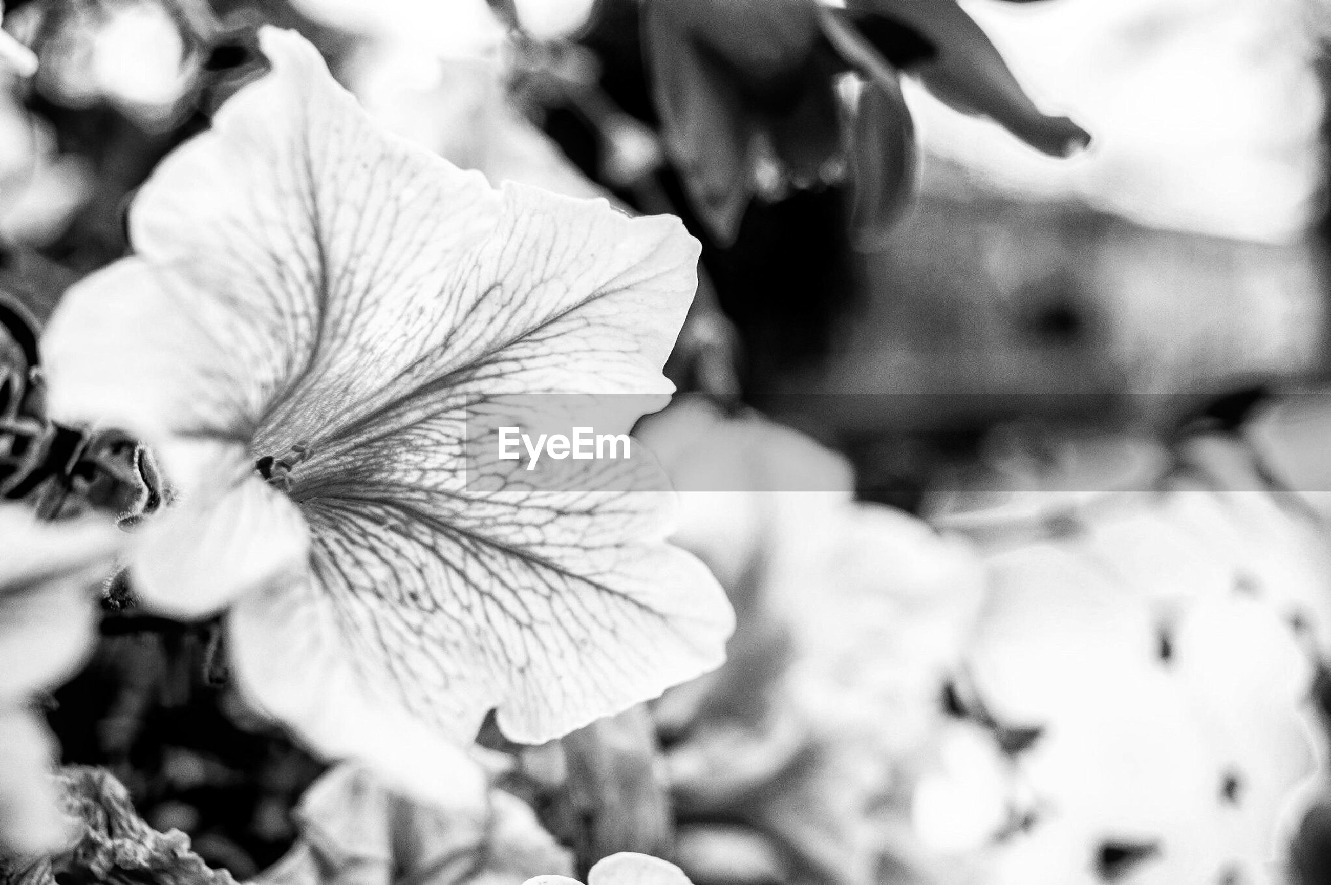 flower, nature, petal, no people, flower head, plant, close-up, growth, beauty in nature, fragility, day, outdoors, freshness