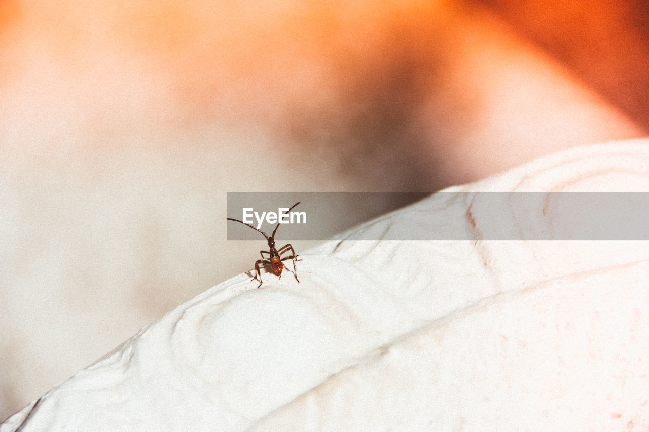insect, invertebrate, animal wildlife, animals in the wild, animal themes, animal, one animal, close-up, focus on foreground, day, selective focus, mosquito, animal wing, one person, unrecognizable person, real people, human body part, outdoors, nature