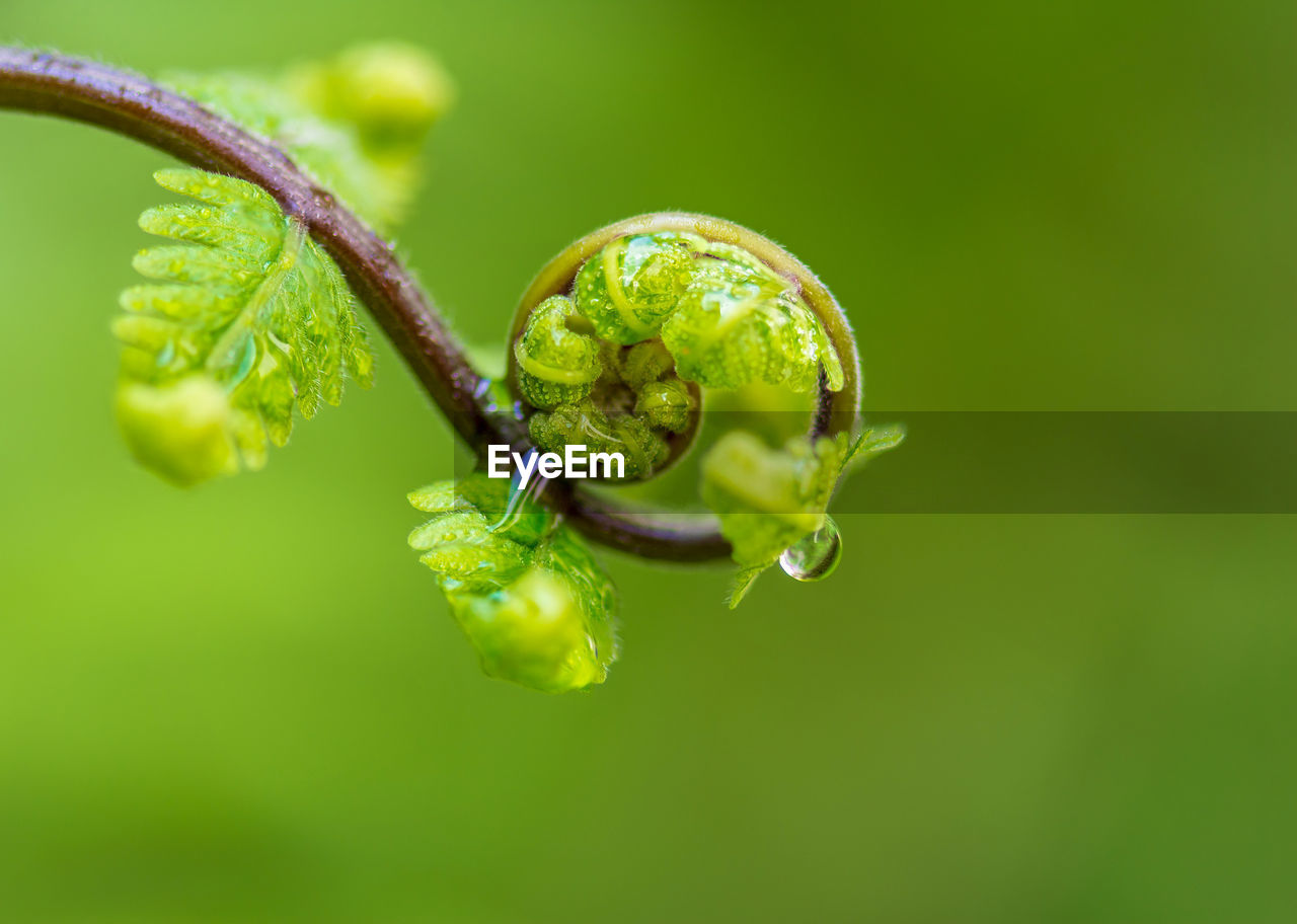 green color, plant, close-up, no people, nature, selective focus, growth, freshness, focus on foreground, beauty in nature, fragility, leaf, vulnerability, plant part, day, outdoors, plant stem, beginnings, tendril, food