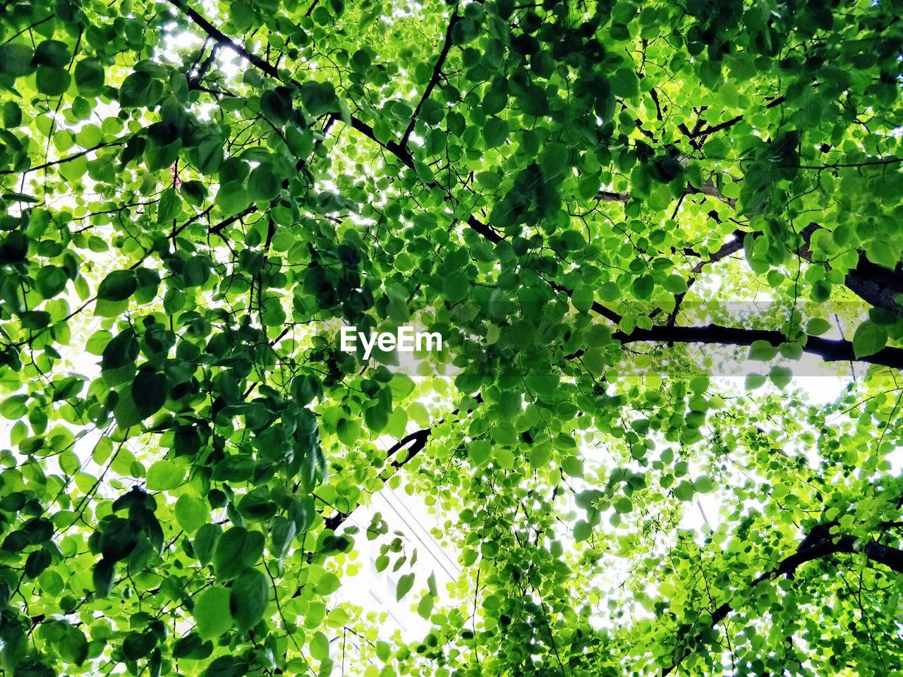 growth, green color, plant, leaf, plant part, tree, nature, no people, beauty in nature, branch, day, low angle view, outdoors, freshness, sunlight, full frame, food and drink, land, tranquility, backgrounds, directly below